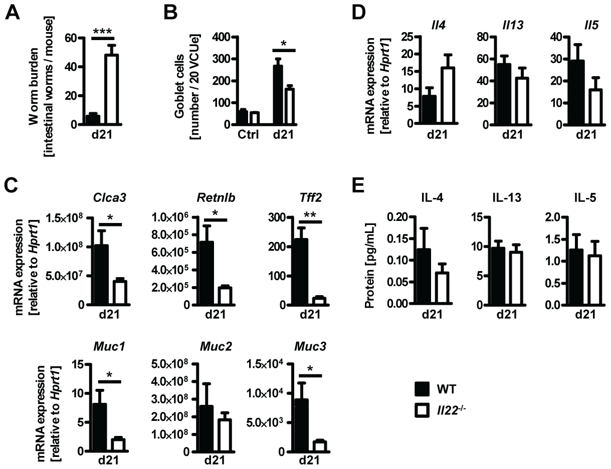 <i>Il22</i><sup>−/−</sup> mice show reduced worm expulsion and goblet cell responses, but normal type 2 responses, during <i>T.muris</i> infection.