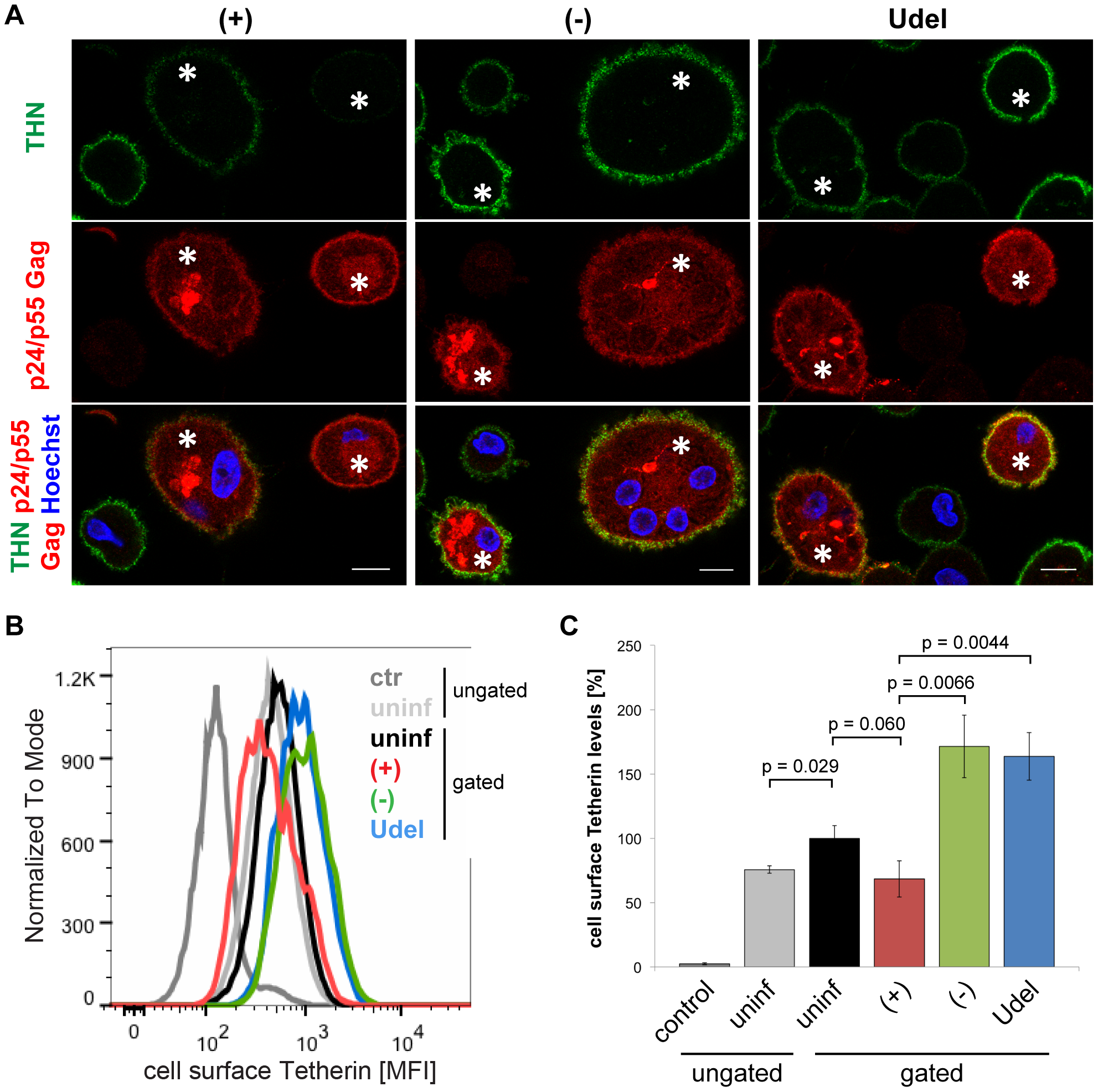 Vpu antagonises cell surface Tetherin in MDMs.