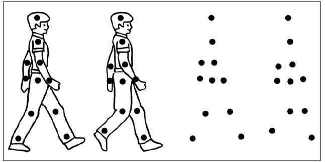 Příklad úlohy k testování percepce biologického pohybu – pohybující se body imitují pohyby hlavních kloubů imaginární postavy.