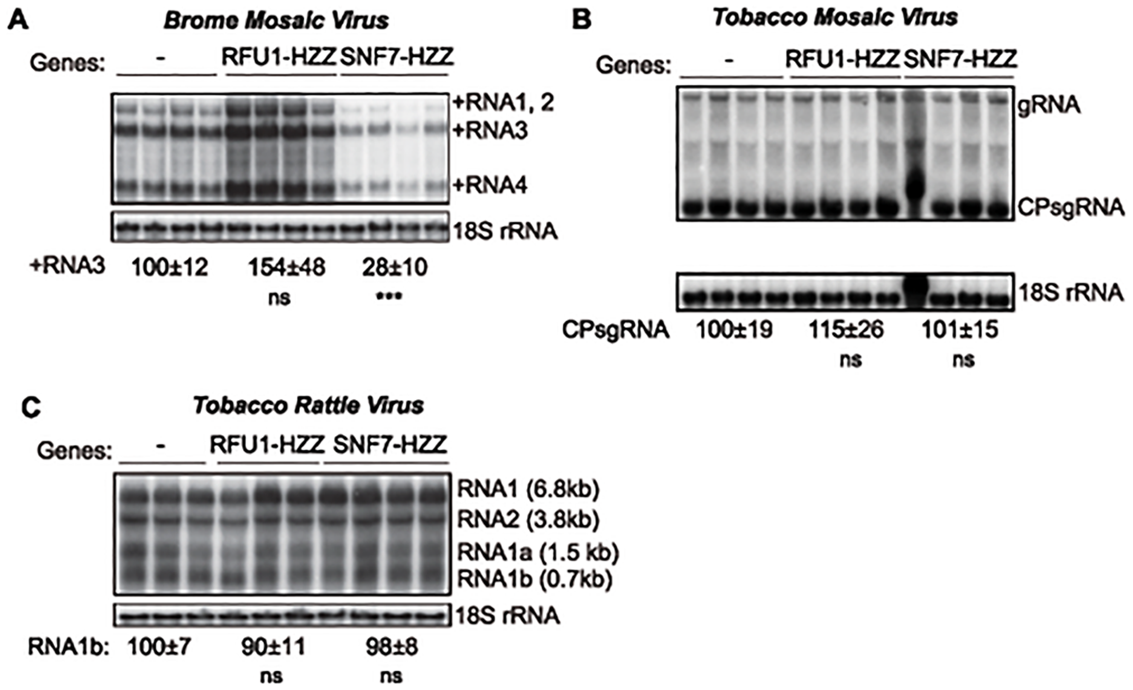 Dominant negative AtSNF7–2 inhibits BMV RNA accumulation in plants.