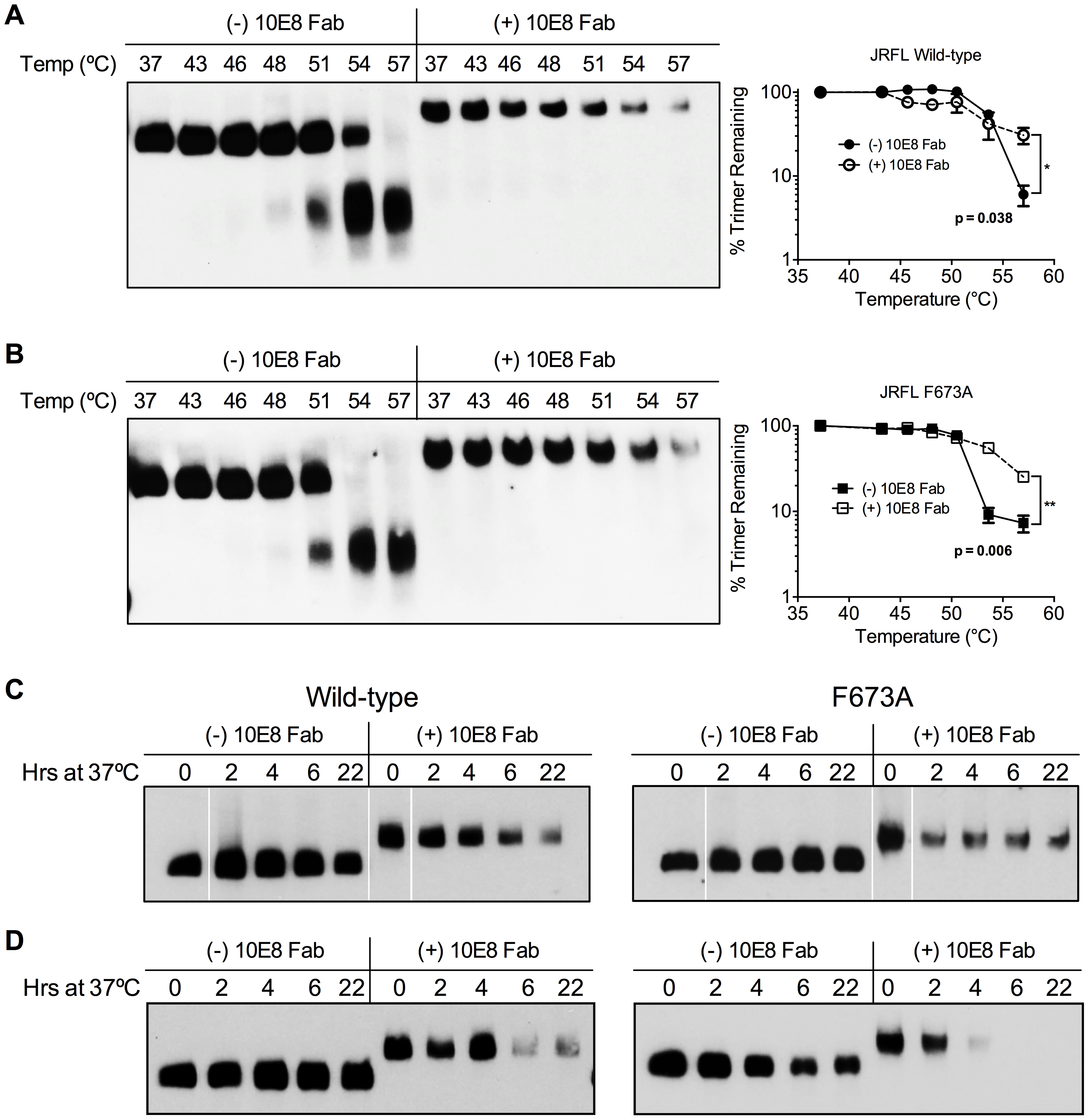 10E8 enhances physical stability of Env trimers against heat-induced denaturation.