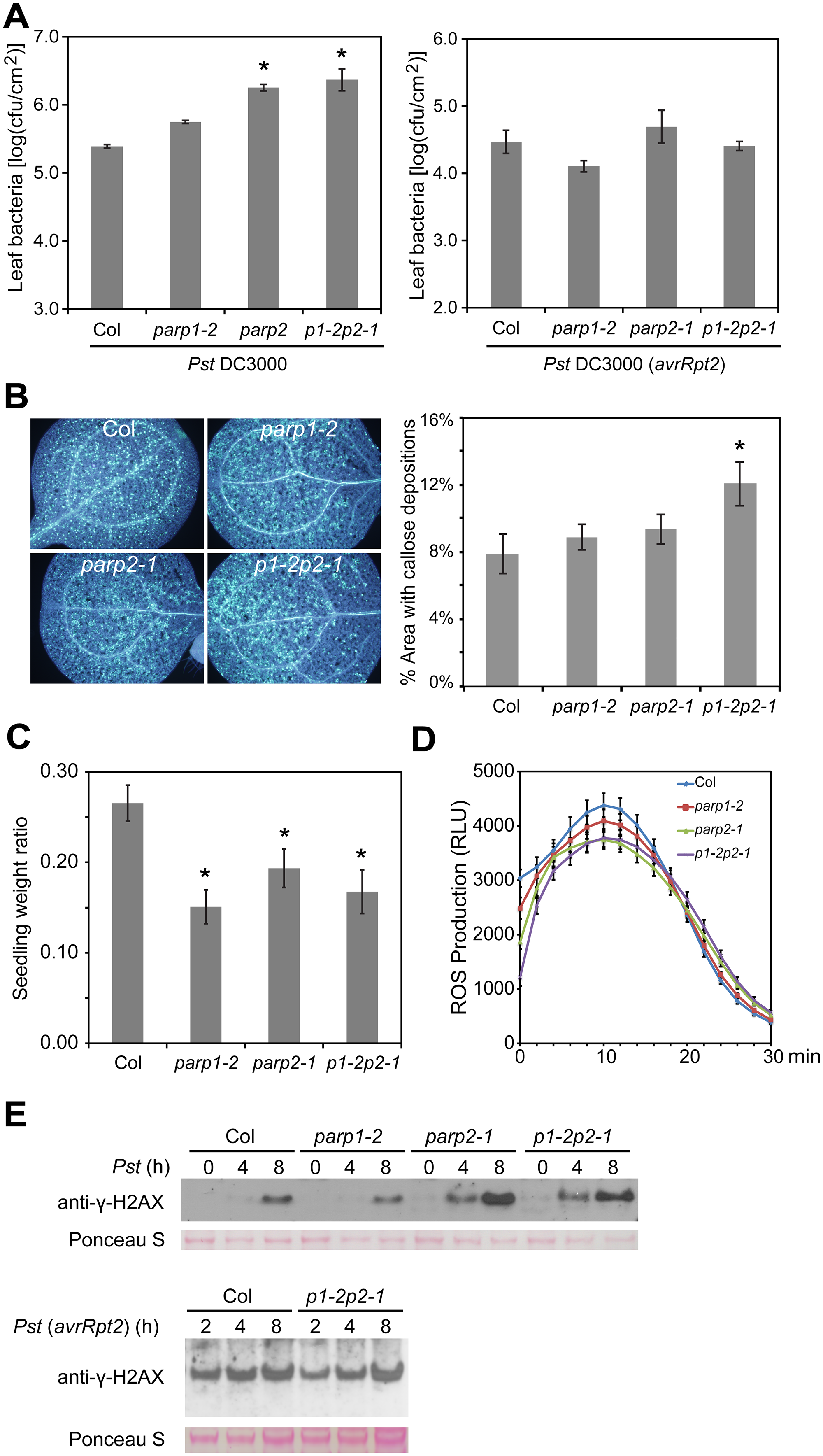 Arabidopsis <i>parp</i> mutants are compromised in basal resistance.
