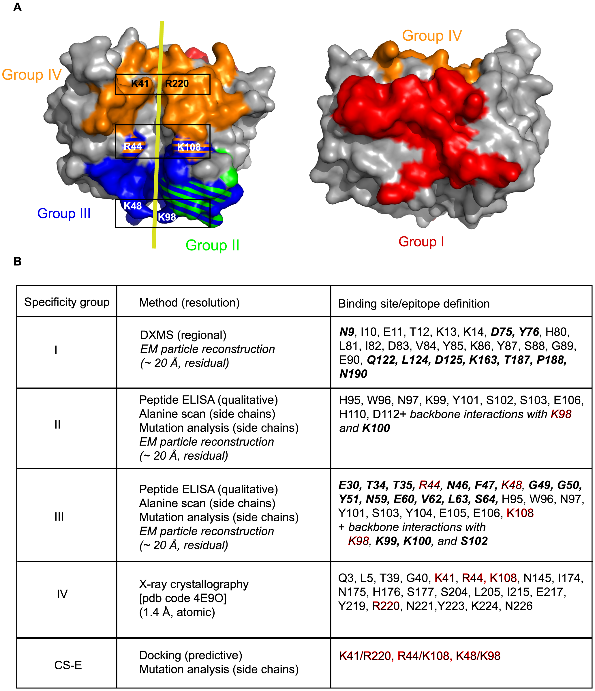 Summary of D8 murine epitome and CS-E binding site.