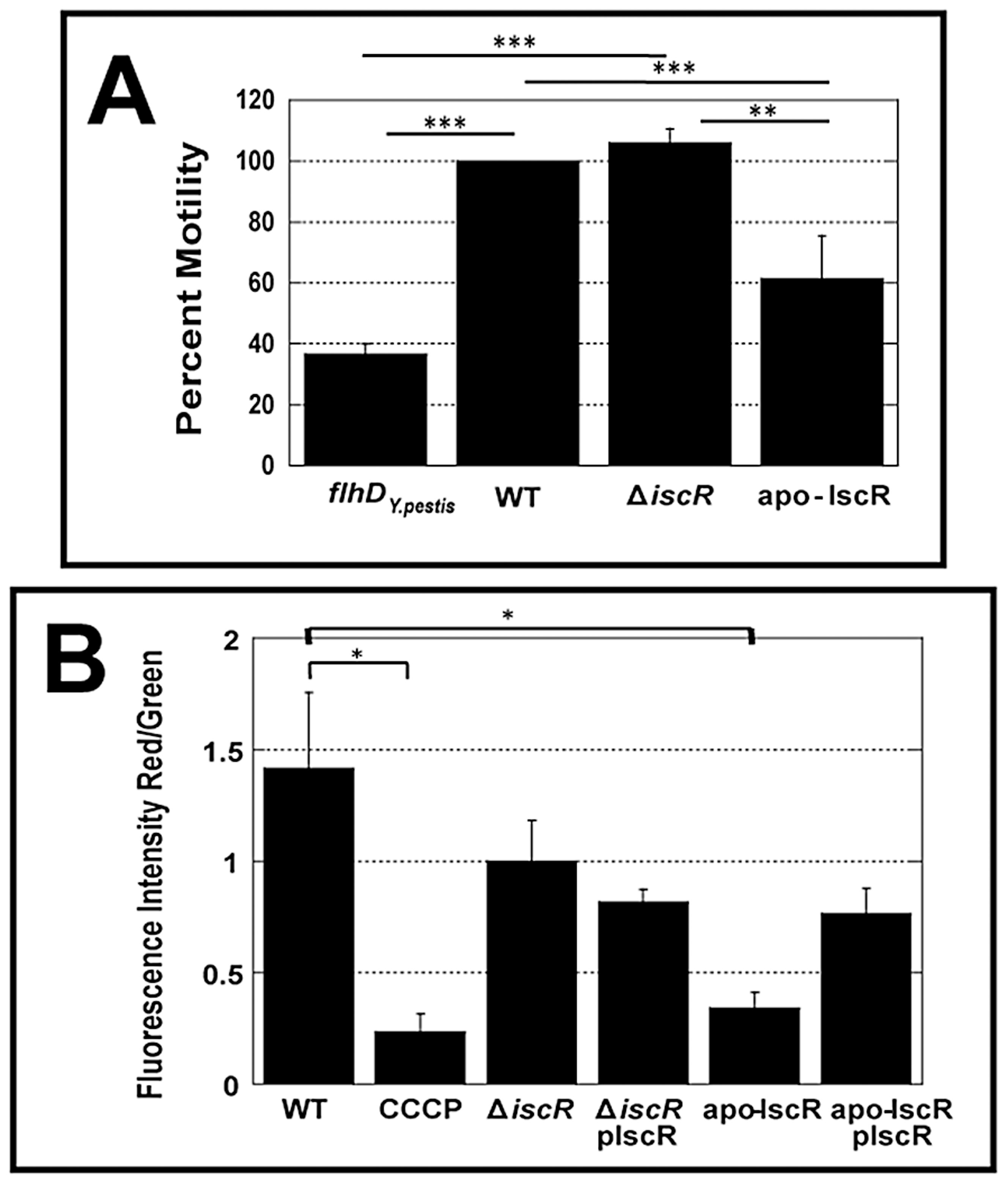 The apo-IscR mutant strain displays decreased motility and disruption of electrical potential.
