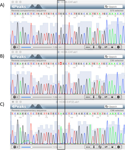 Sequencing results of the <i>LDLRAP1</i> gene. Chromatograms showing part of exon 4 for the (A) wild-type, (B) heterozygous, and (C) homozygous p.Q136* variant (boxed).