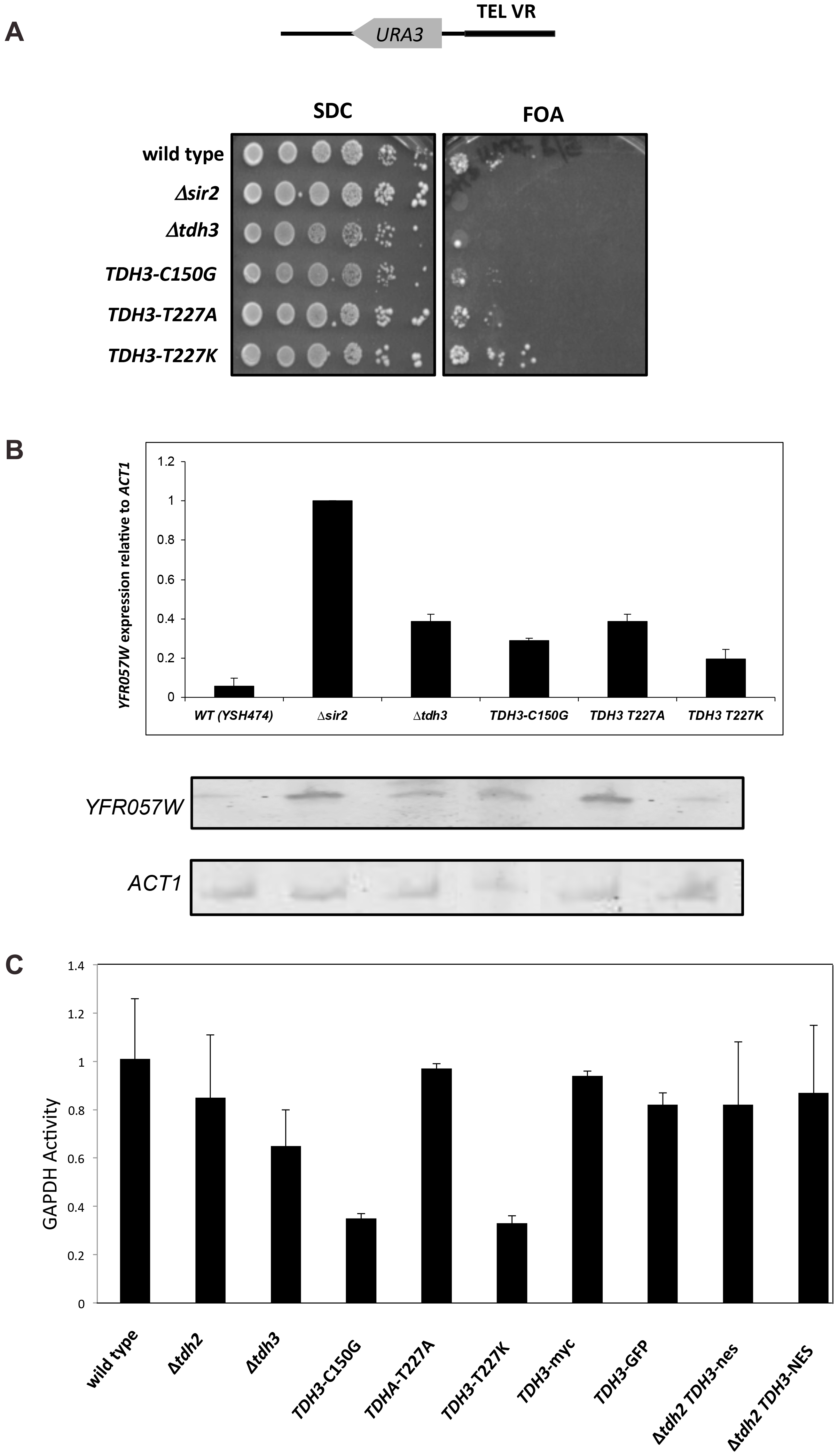 Separation of silencing and GAPDH activity in <i>TDH3</i> alleles.