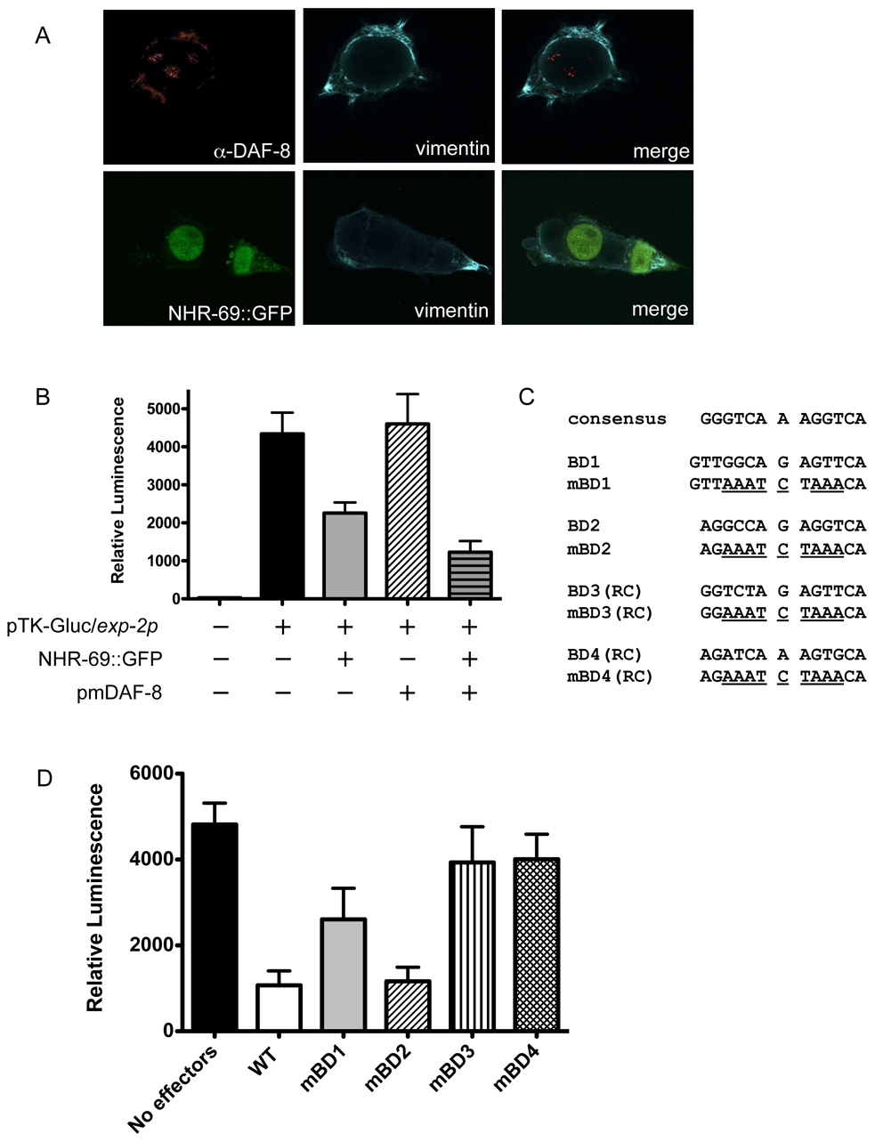 NHR-69 and DAF-8 suppress <i>exp-2</i> promoter activity in mammalian cells.