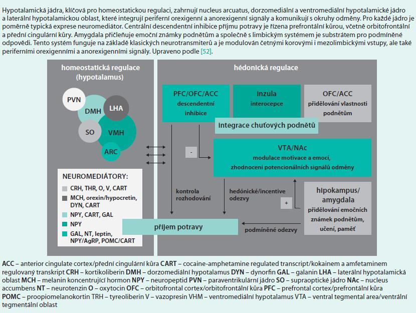 Schéma 11. Integrace homeostatické hédonické regulace příjmu potravy