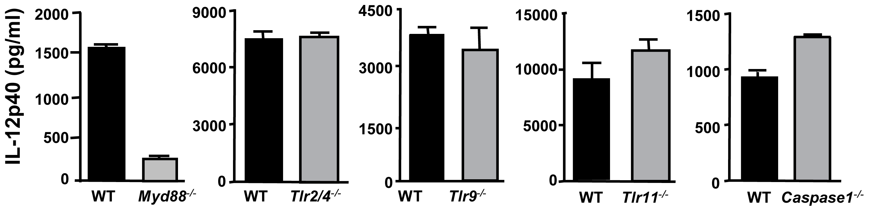 Induction of IL-12 by ΔROP16 tachyzoites requires MyD88, but occurs independently of TLR2, TLR4, TLR9, TLR11, and caspase-1.