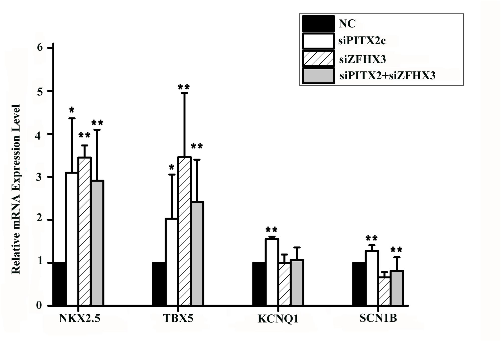 <i>PITX2c</i> and <i>ZFHX3</i> regulate expression of <i>NKX2</i>.<i>5</i>, <i>TBX5</i>, <i>KCNQ1</i> and <i>SCN1B</i>.