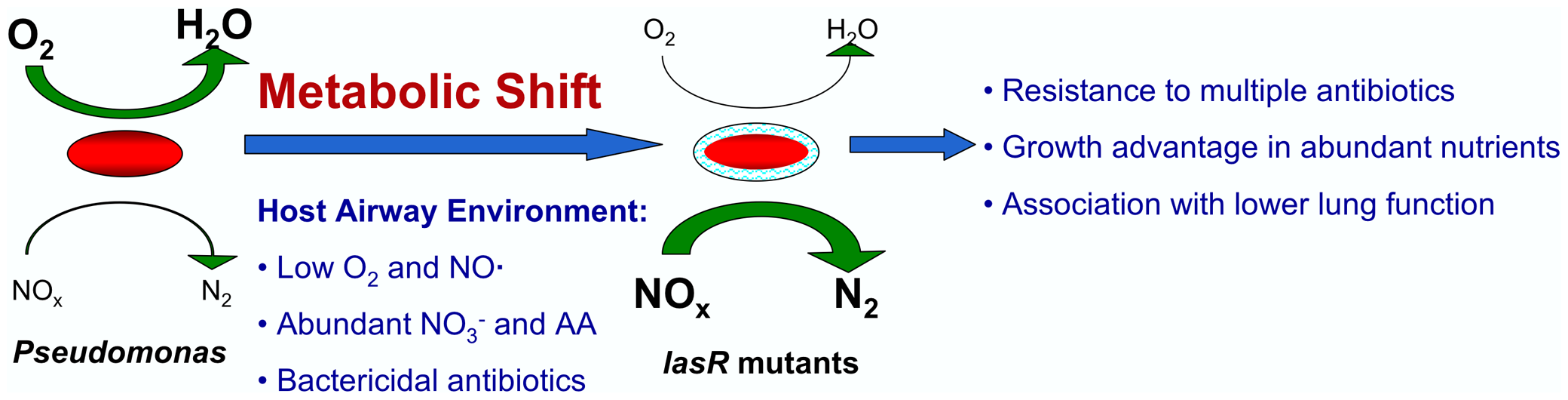 A model for metabolic changes in CF-adapted <i>lasR</i> mutant isolates of <i>P. aeruginosa</i>.
