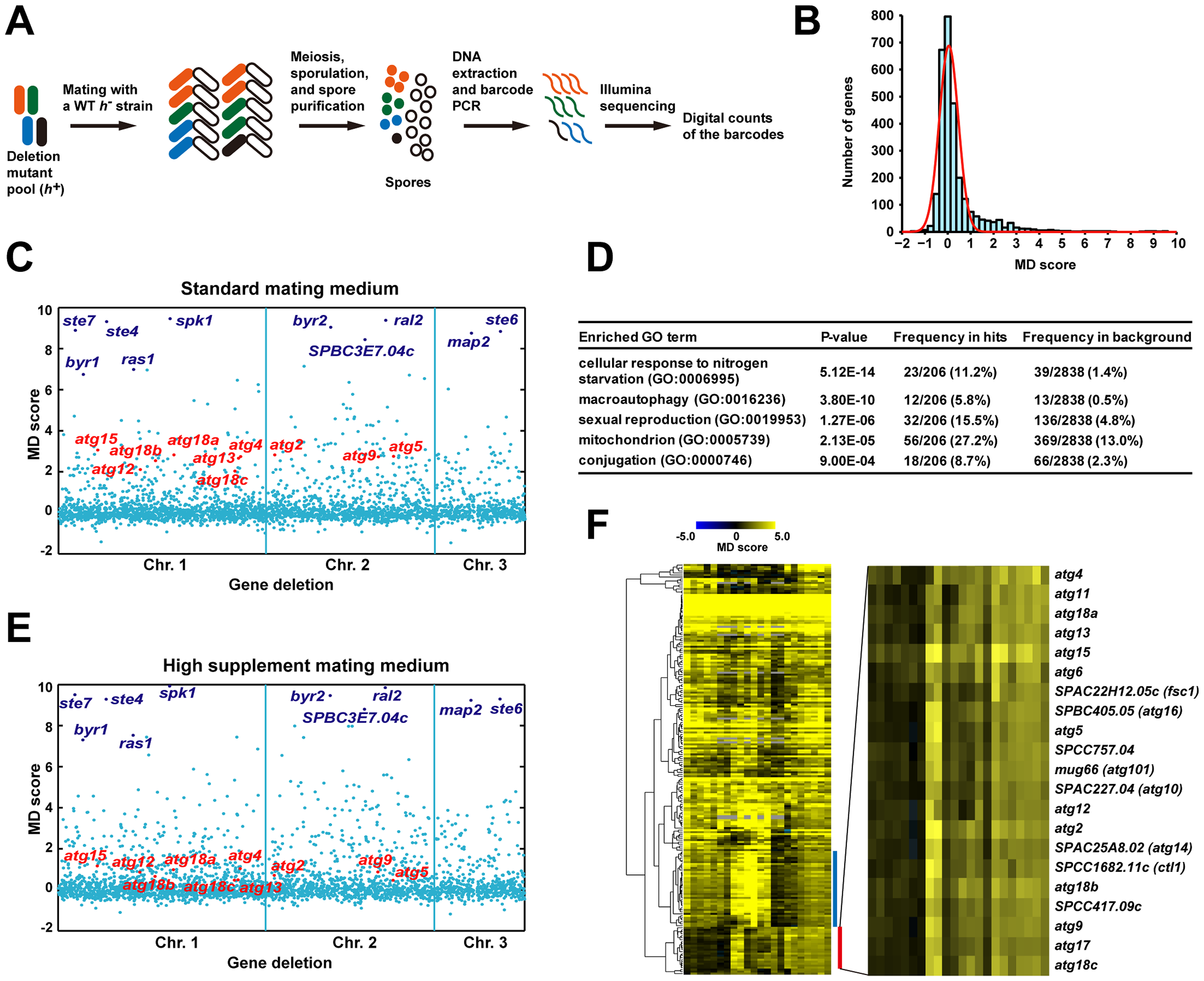 Barcode sequencing-based screens of mating phenotype.