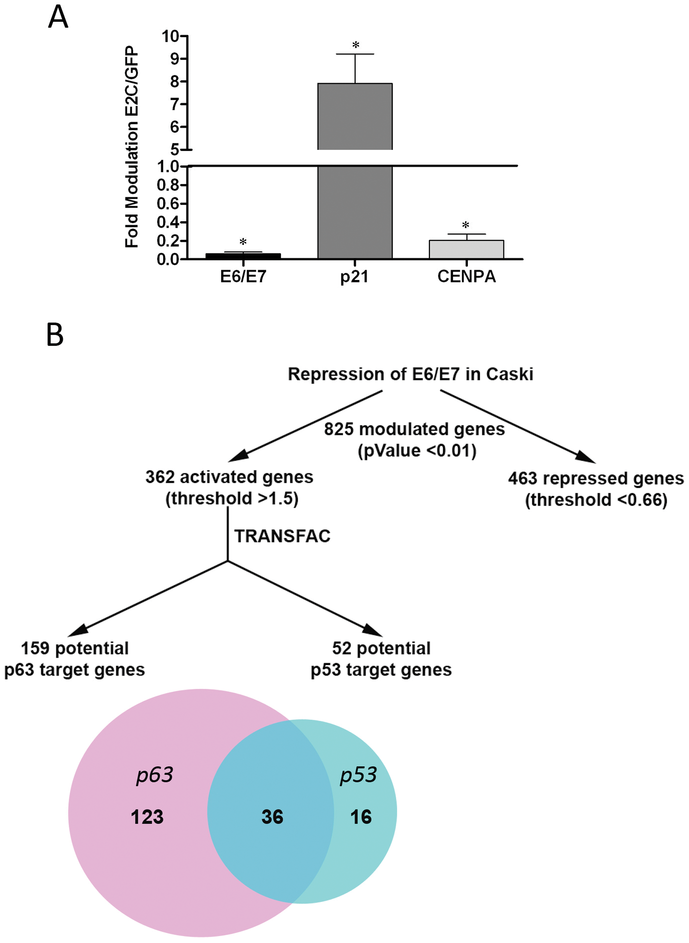 Transcriptome analyses in Caski cells after E2C-induced transcriptional repression of E6 and E7.