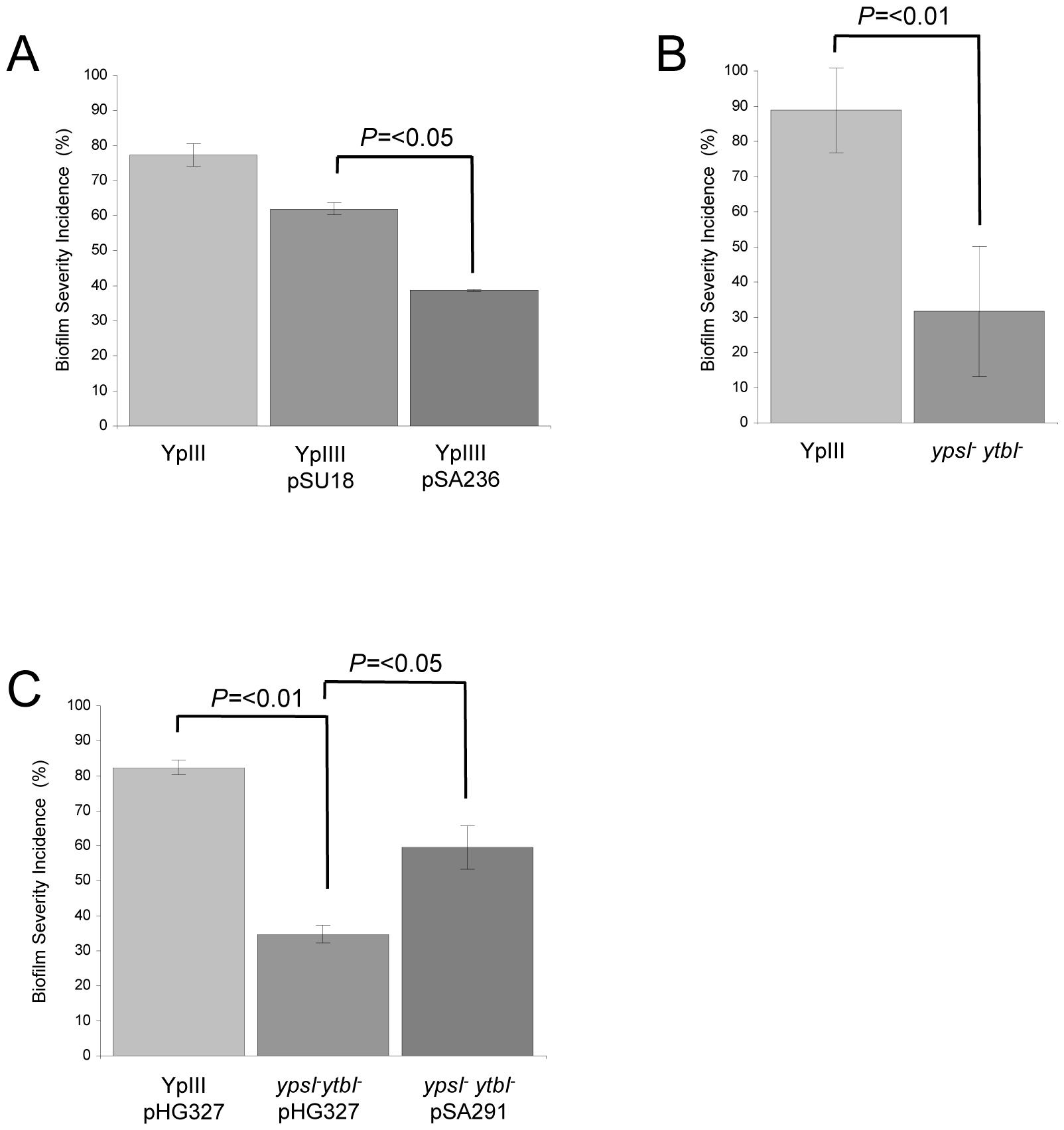 QS controls <i>Y. pseudotuberculosis</i> biofilm formation on <i>C. elegans.</i>