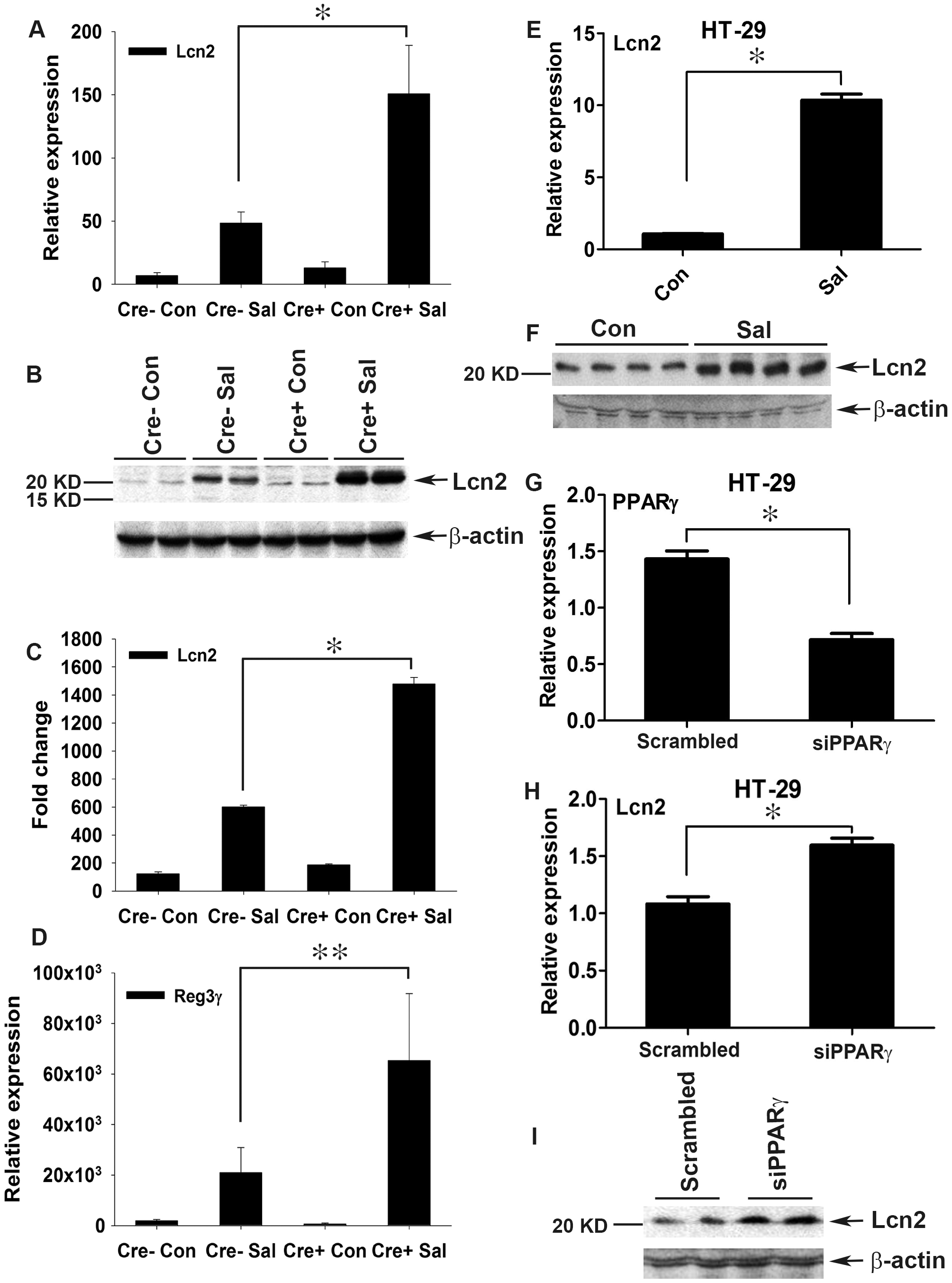 Colonic Lcn2 expression in PPARγVillinCre+ mice increases after <i>S.</i> Typhimurium challenge.