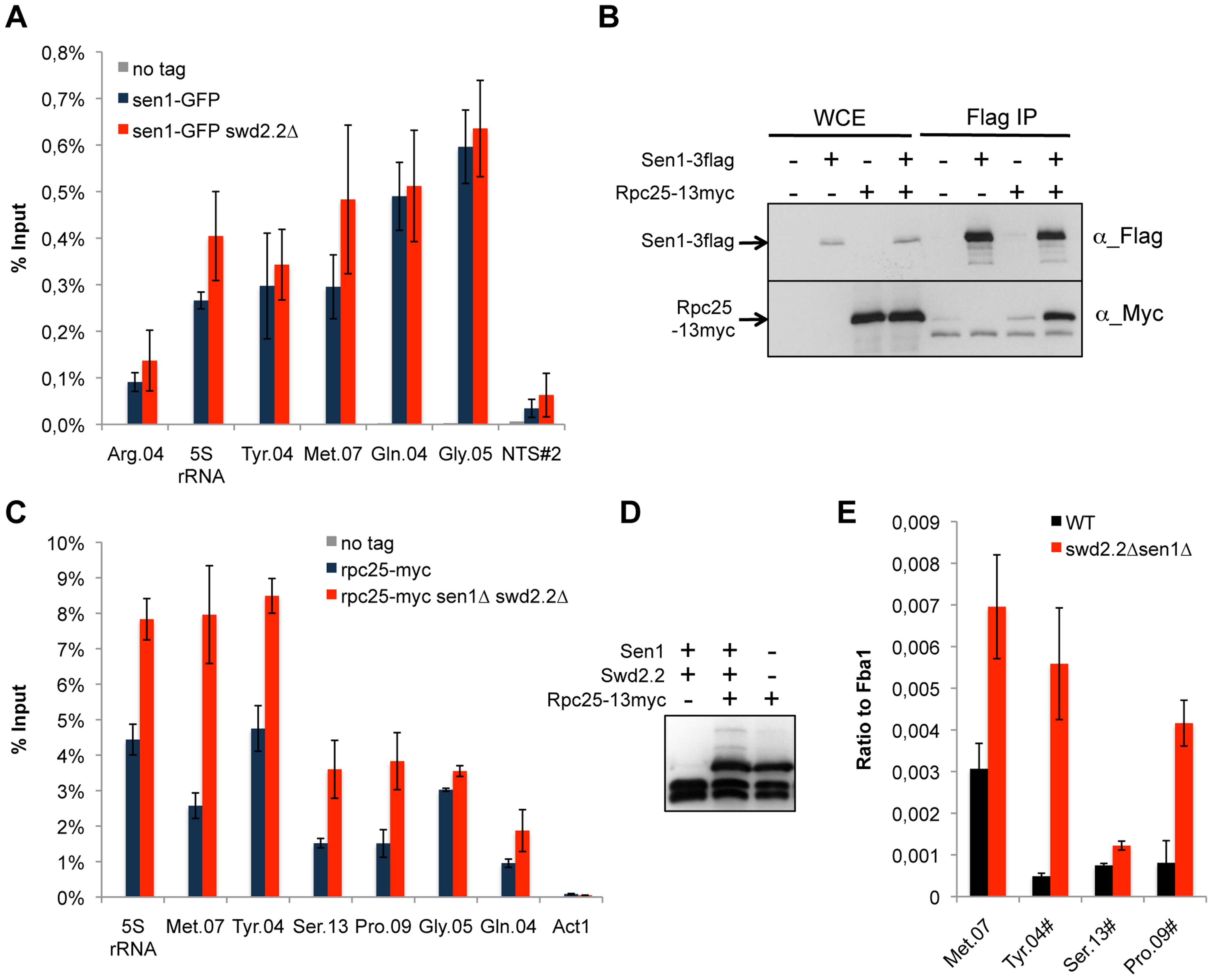 Transcription is enhanced at Pol III-transcribed genes when Swd2.2 and Sen1 are missing.
