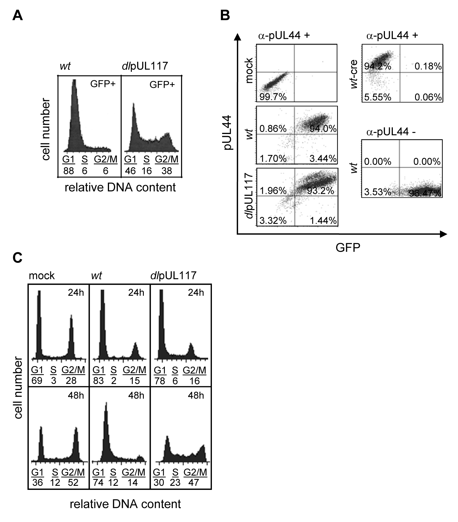 pUL117 was required to block host DNA synthesis of HCMV-infected cells at late times during infection.