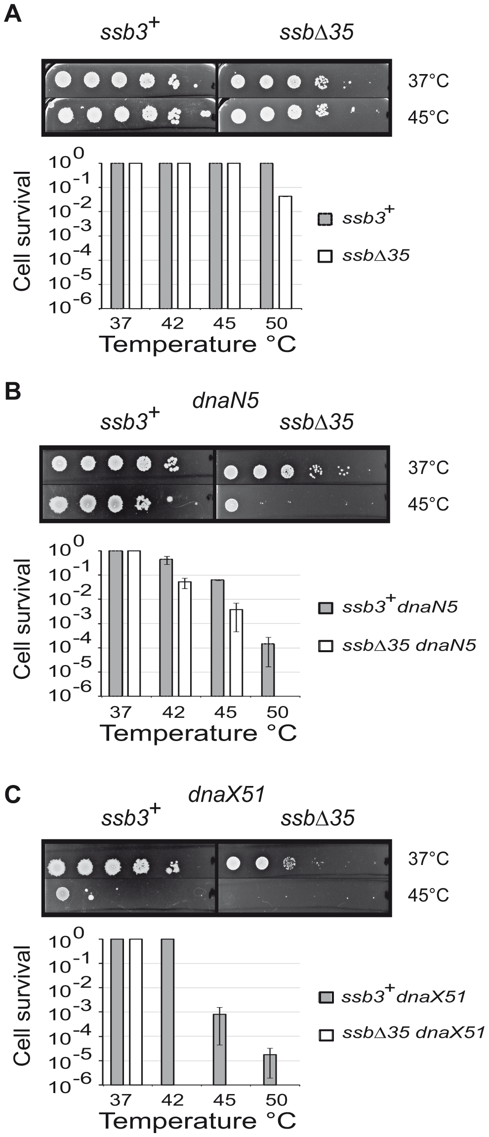 The SSB<sub>Cter</sub> is crucial for the rescue of arrested DNA replication forks.