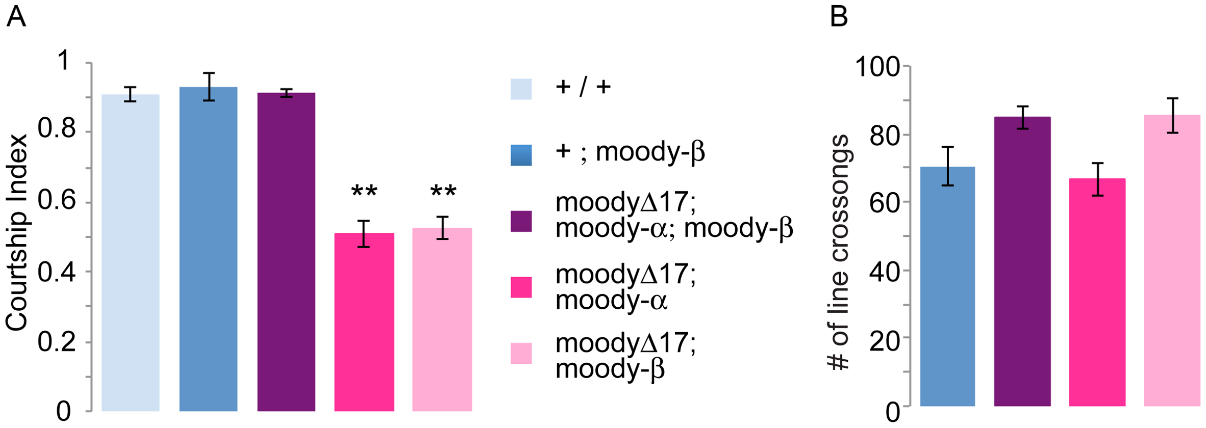 <i>moody-α</i> and <i>moody-β</i> mutants have courtship defects.