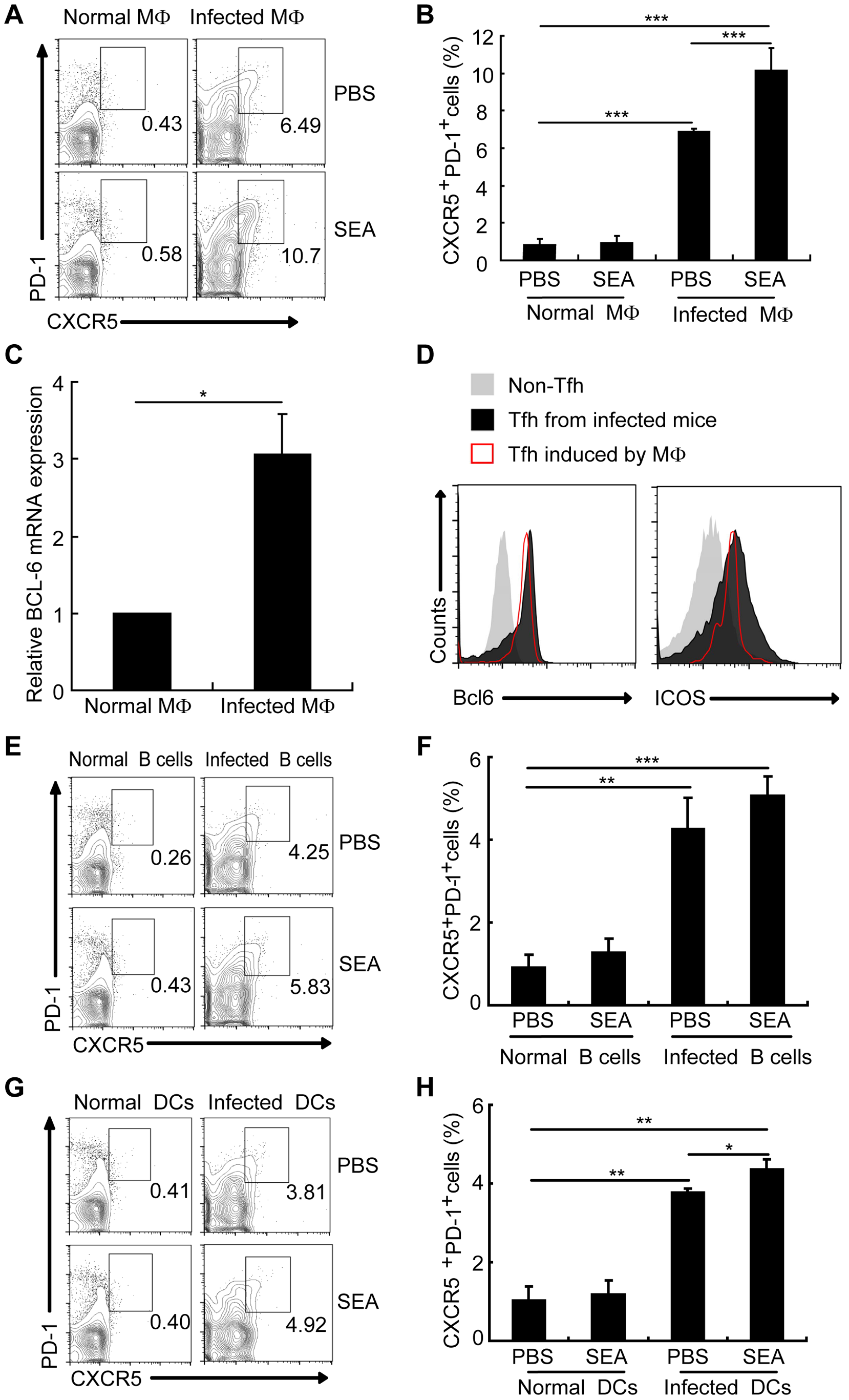 Macrophages drive Tfh cell generation.