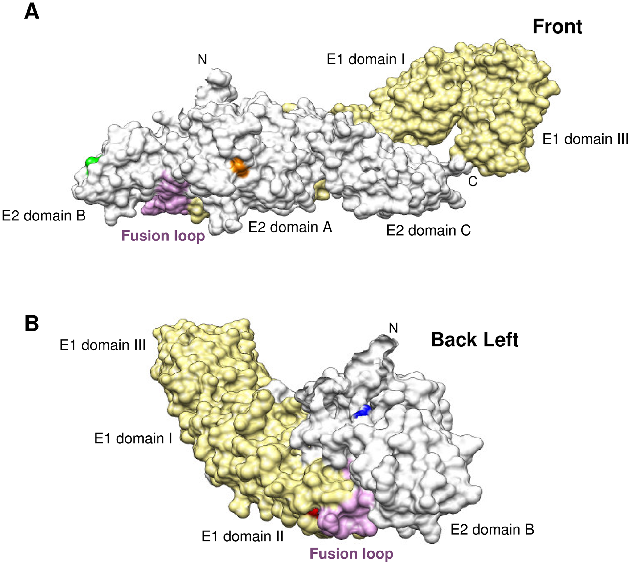 Location of E1.101, E2.12, E2.82 and E2.216 in the CHIKV E1/E2 heterodimer.