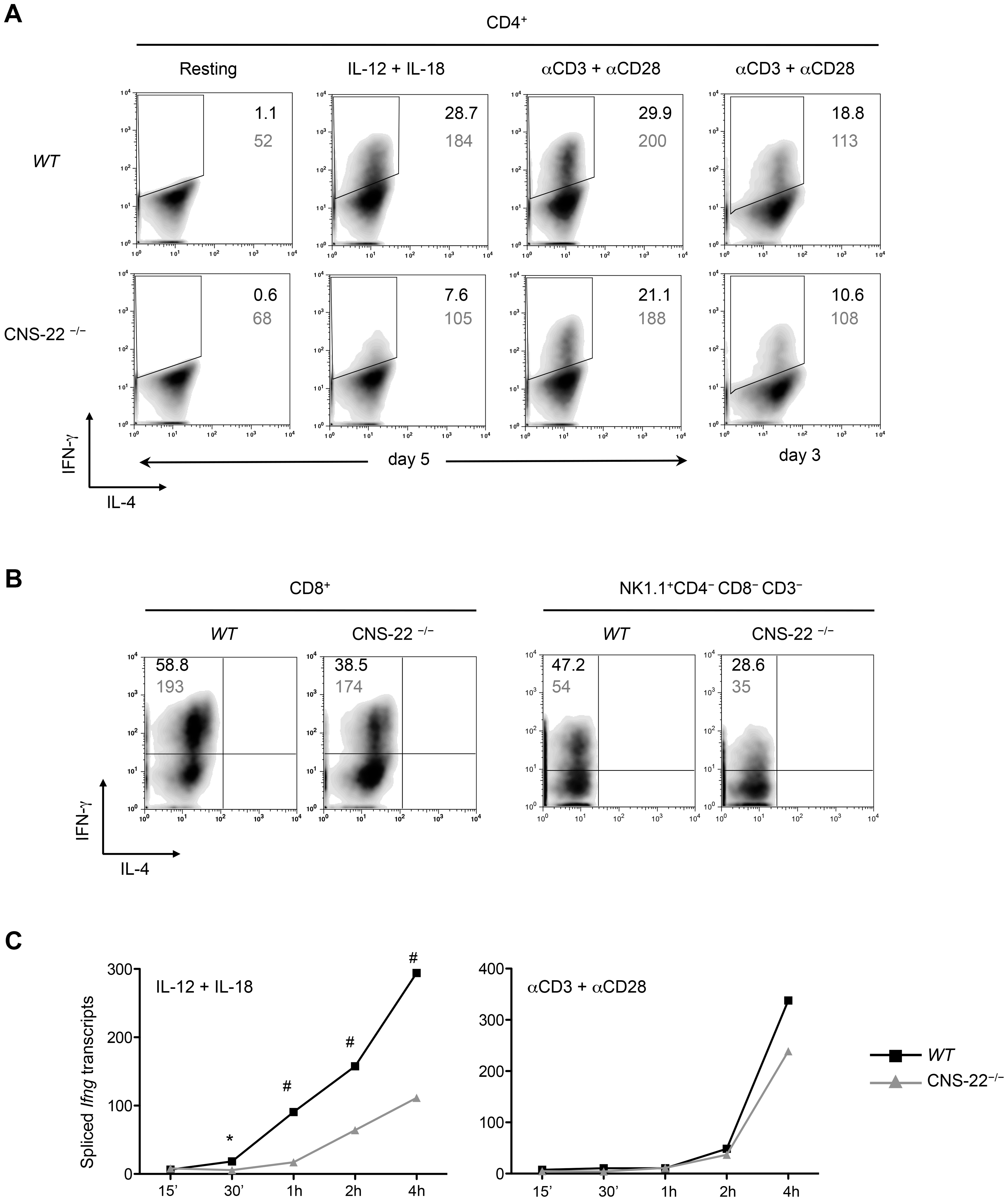 IL-12+IL-18 driven <i>Ifng</i> transcription is compromised in CNS-22<sup>−/−</sup> T cells and NK cells.