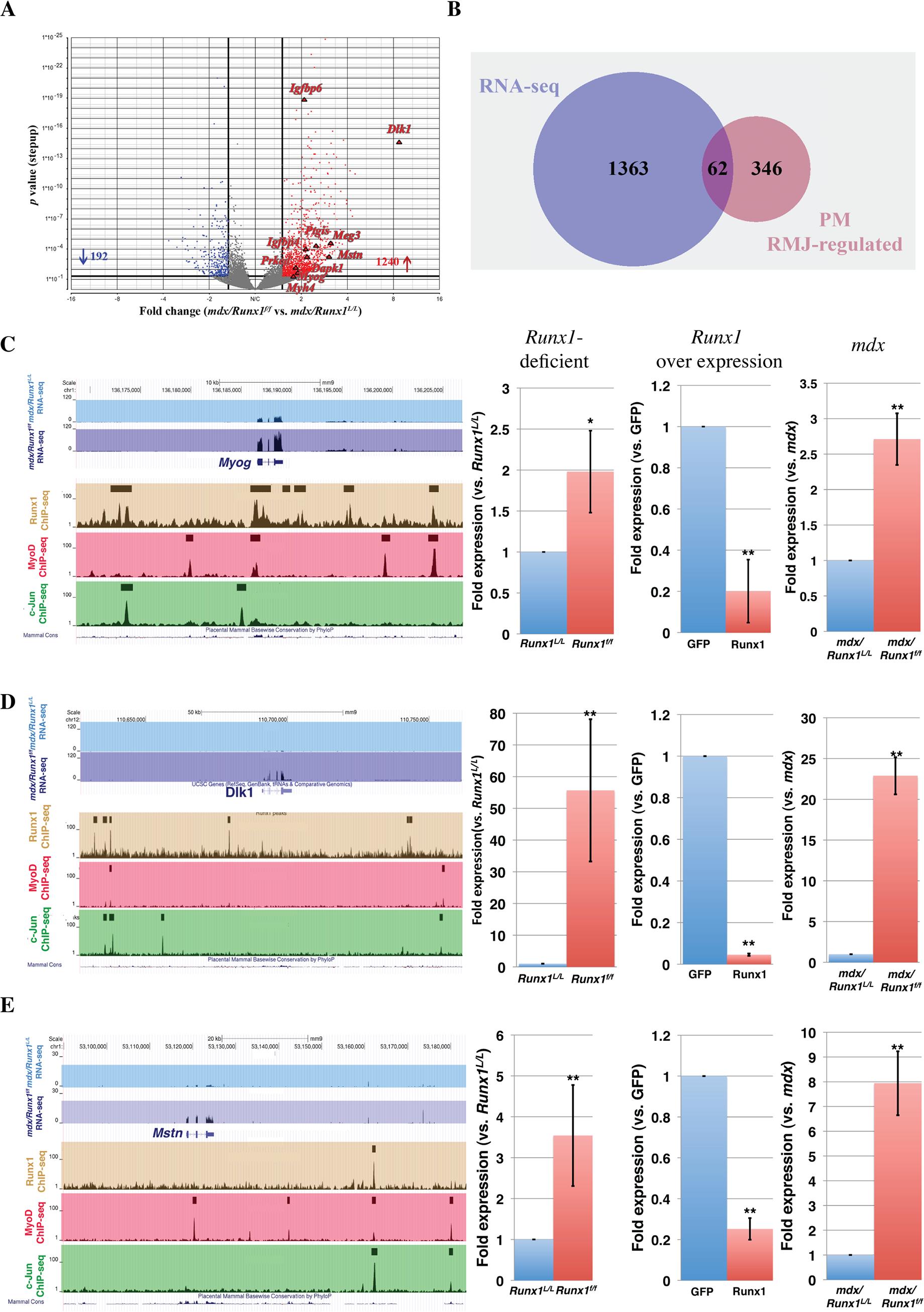 Validation of <i>in vivo</i> high confidence Runx1-regulated genes.