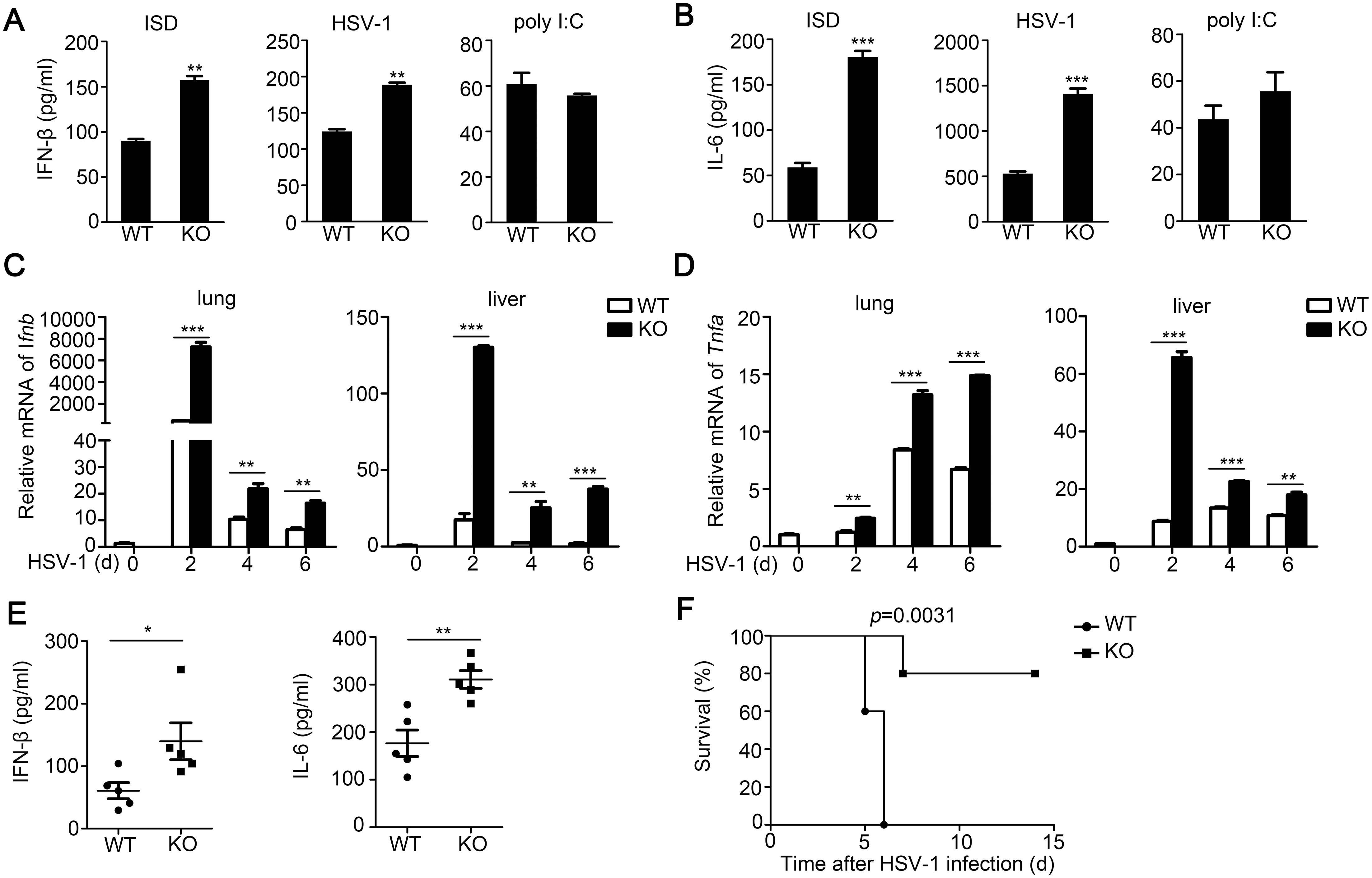 TRIM30α deficiency protects the mice from DNA virus infection.