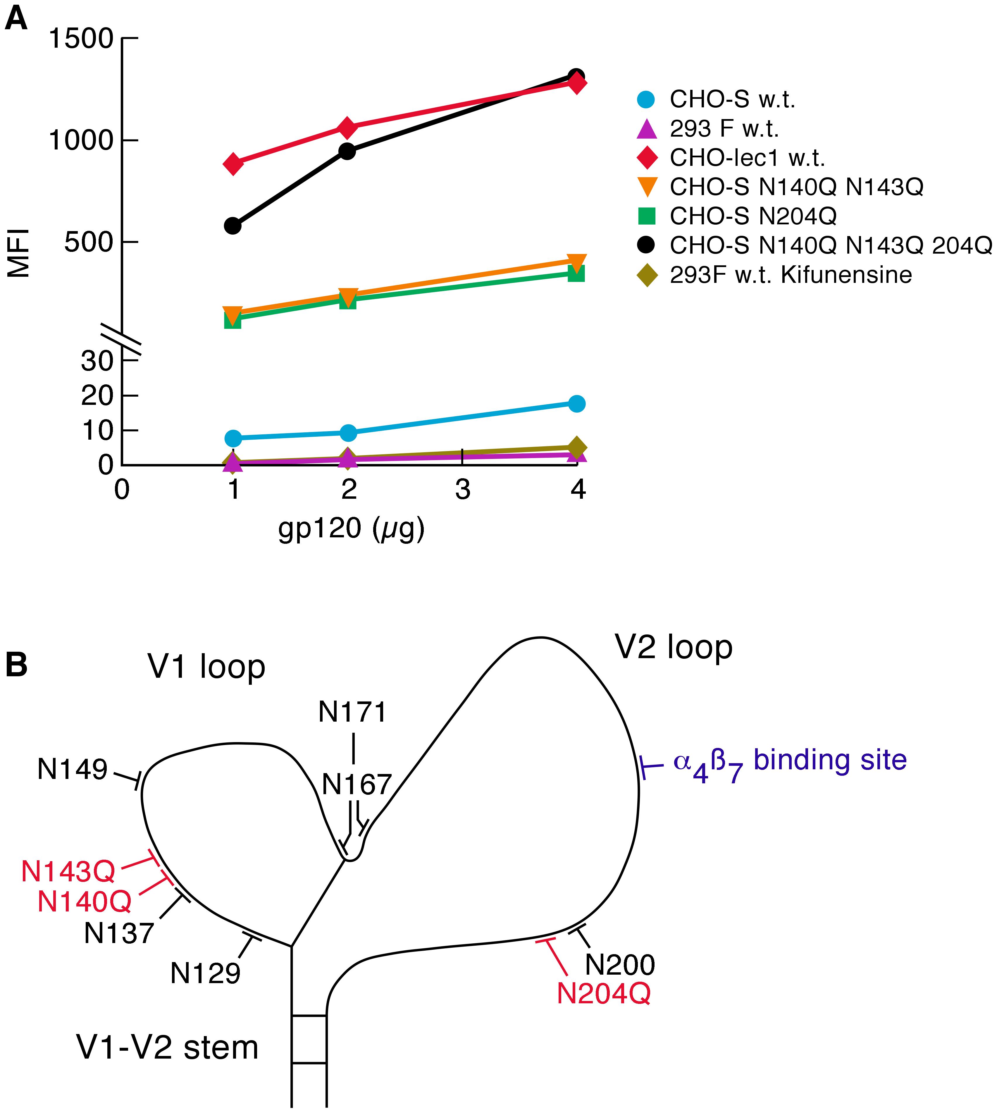 Effect of glycan content on the α<sub>4</sub>β<sub>7</sub>-reactivity.