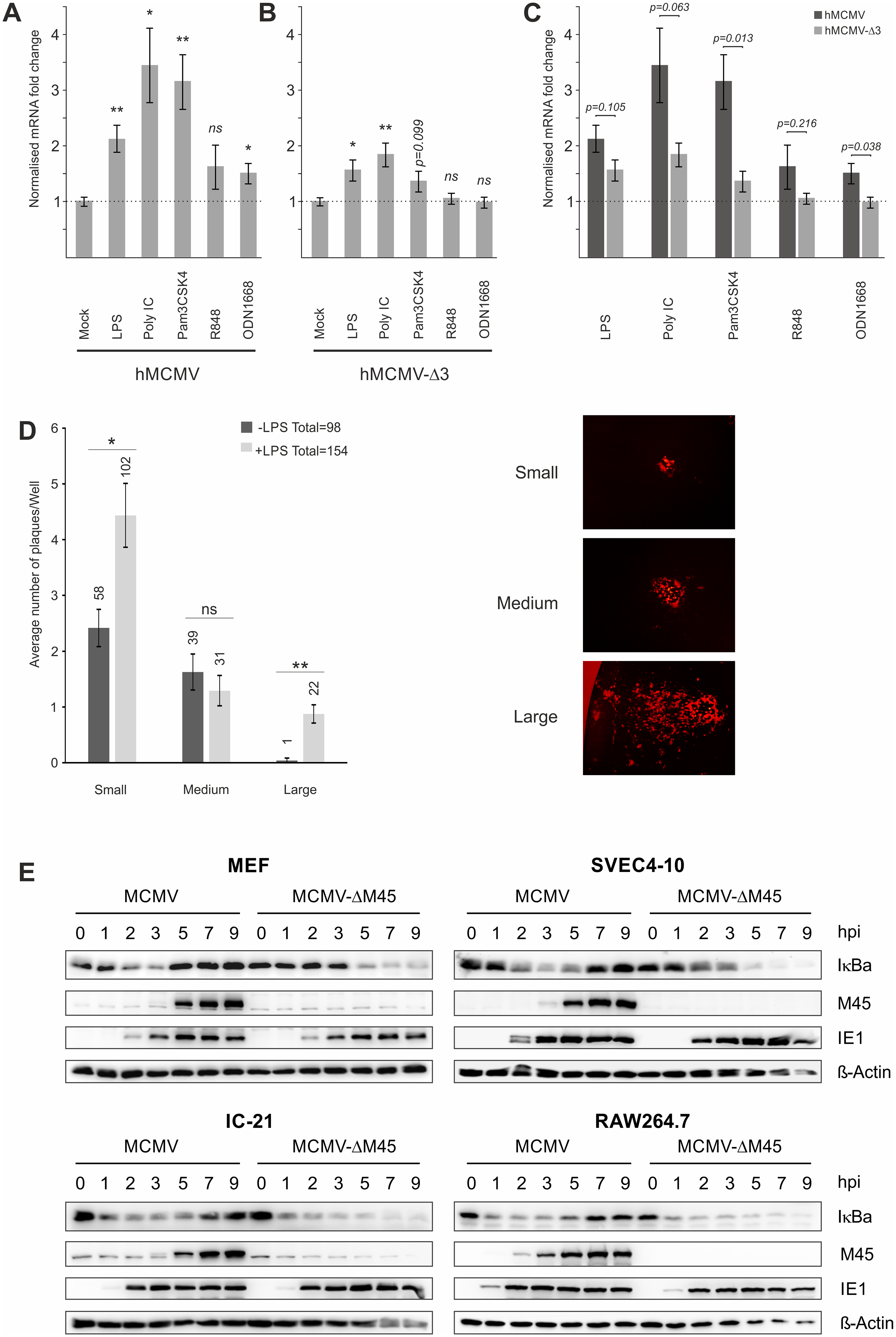 Effects of TLR-agonists go beyond NFκB activity and are independent of tegument proteins.