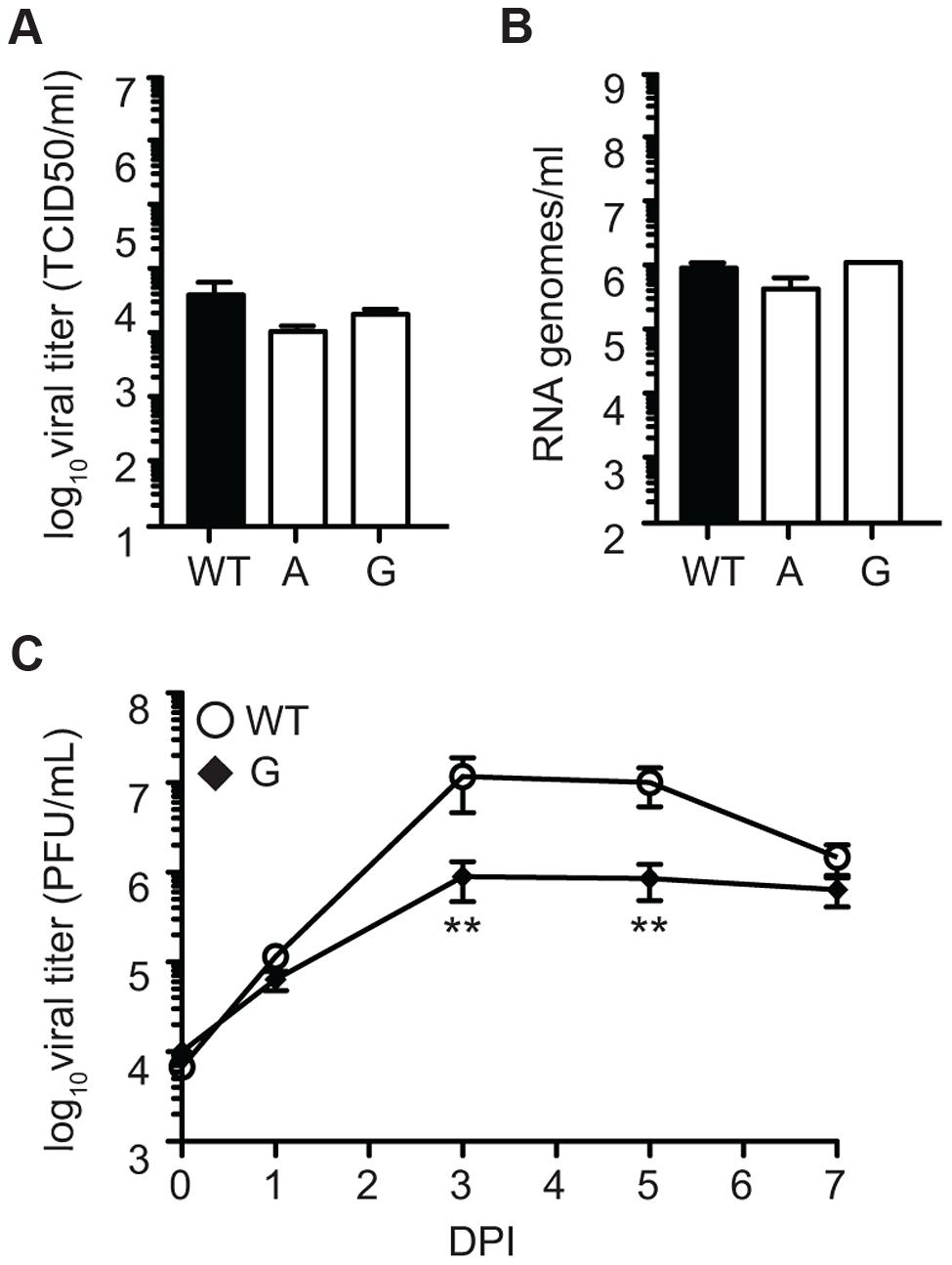 SINV mutator 482G is attenuated in fruit flies.