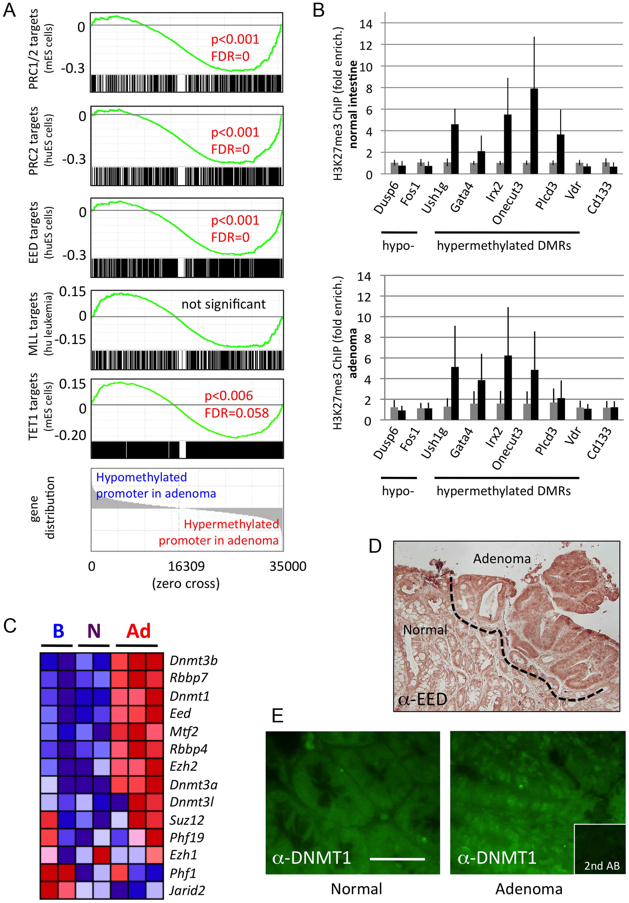 Hypermethylated DMRs are associated with Polycomb targets.