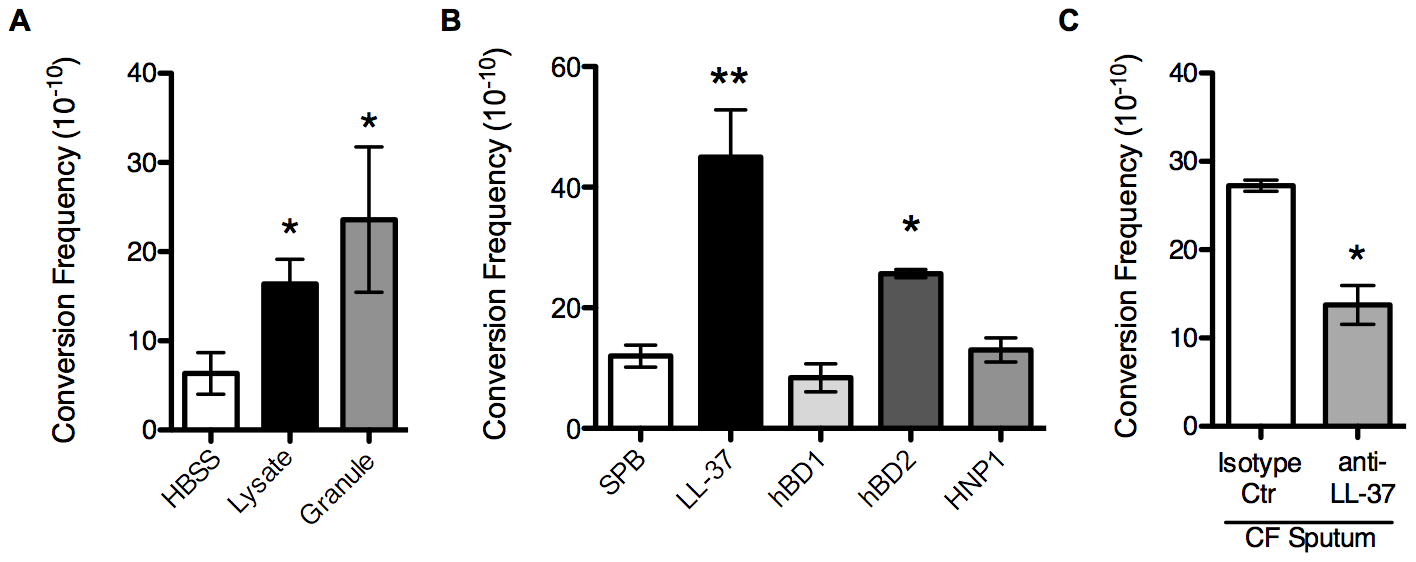 Non-oxidative PMN pathways promote mucoid conversion.