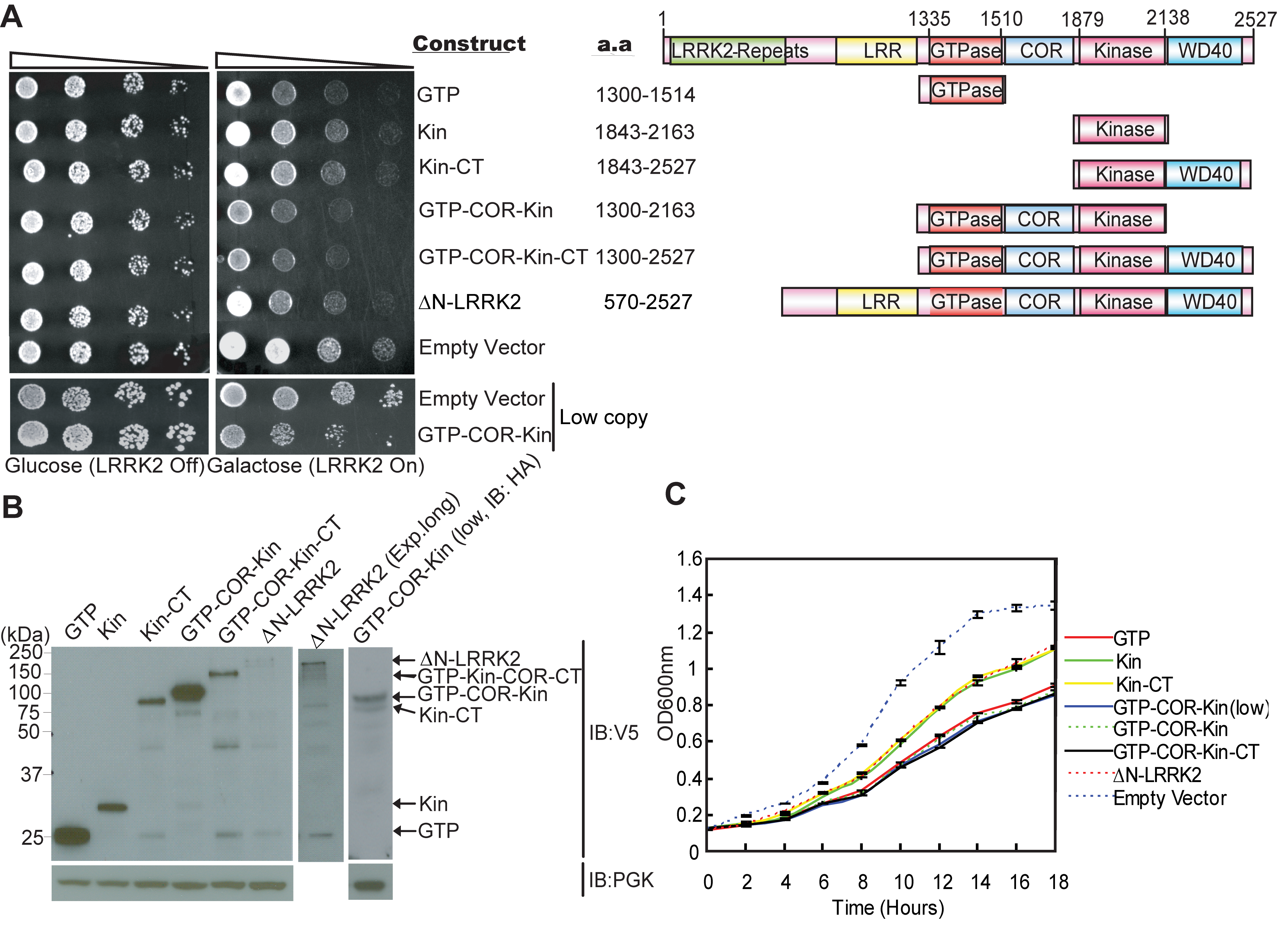 Expression of LRRK2 domain fragments reduces the viability of yeast.