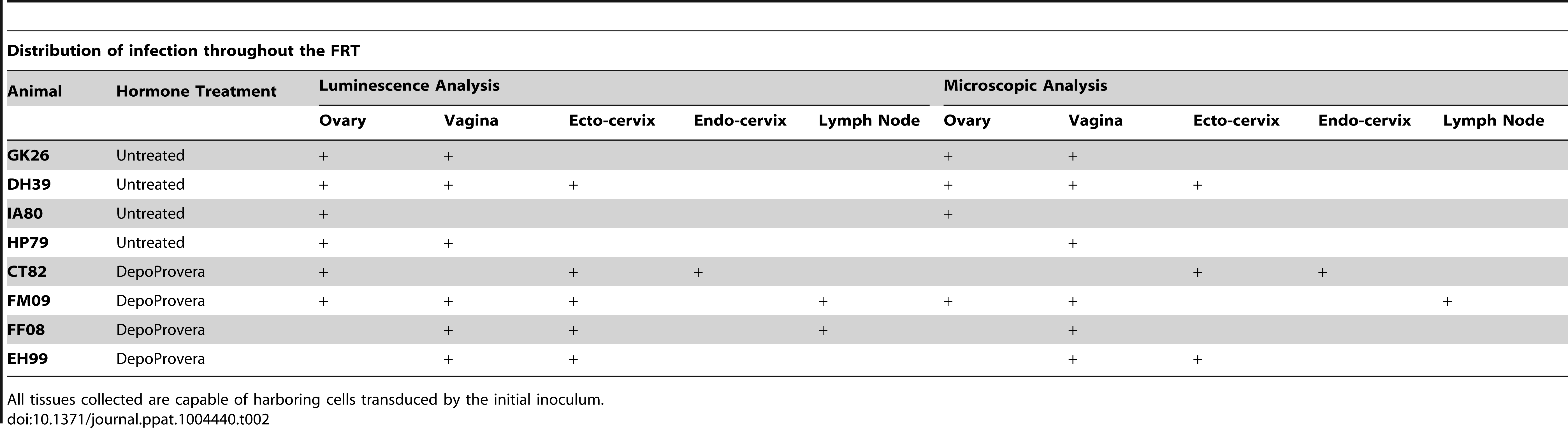 Localization of luciferase expression and microscopic confirmation of infection in 8 JRFL pseudotyped inoculated Rhesus Macaques.