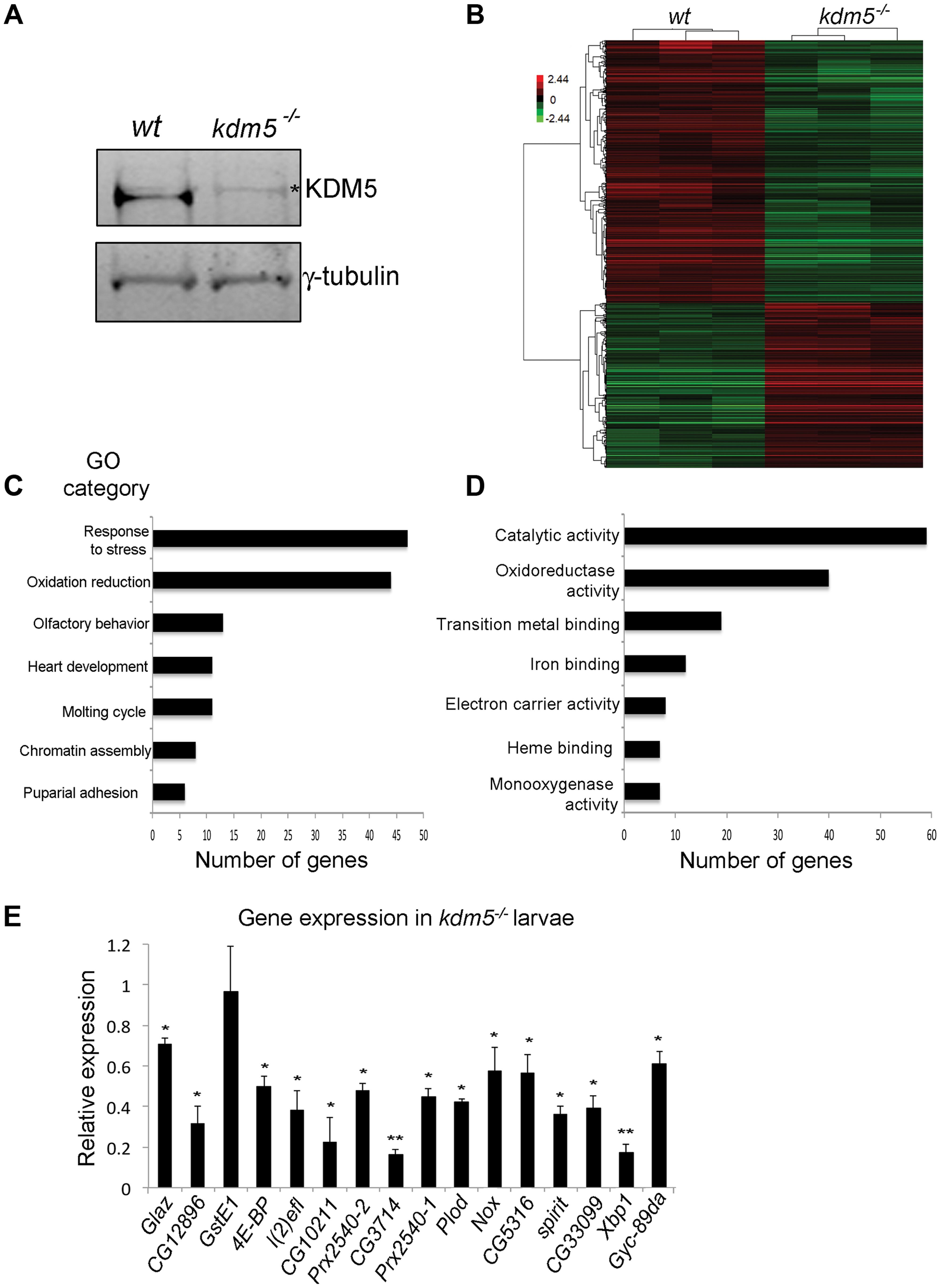 KDM5 mutants show reduced expression of genes required to reduce oxidative stress.
