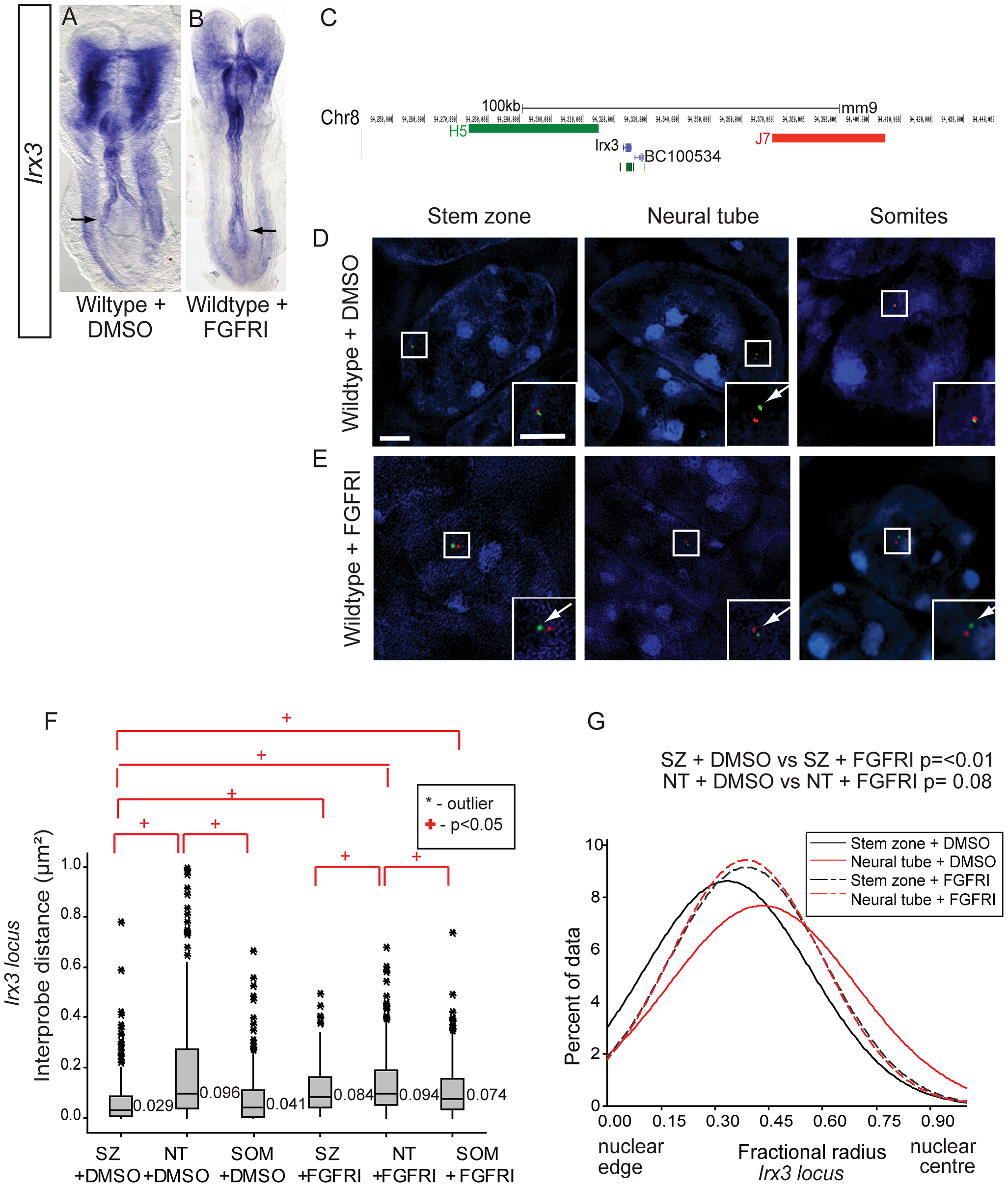 FGF signalling regulates chromatin compaction and nuclear position at the locus of a further neural progenitor gene, <i>Irx3</i>.