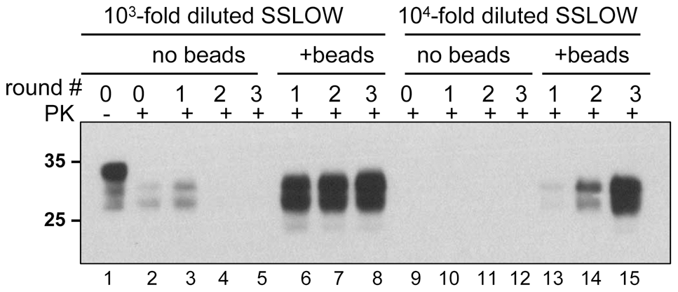 Beads improve the amplification efficiency of SSLOW.
