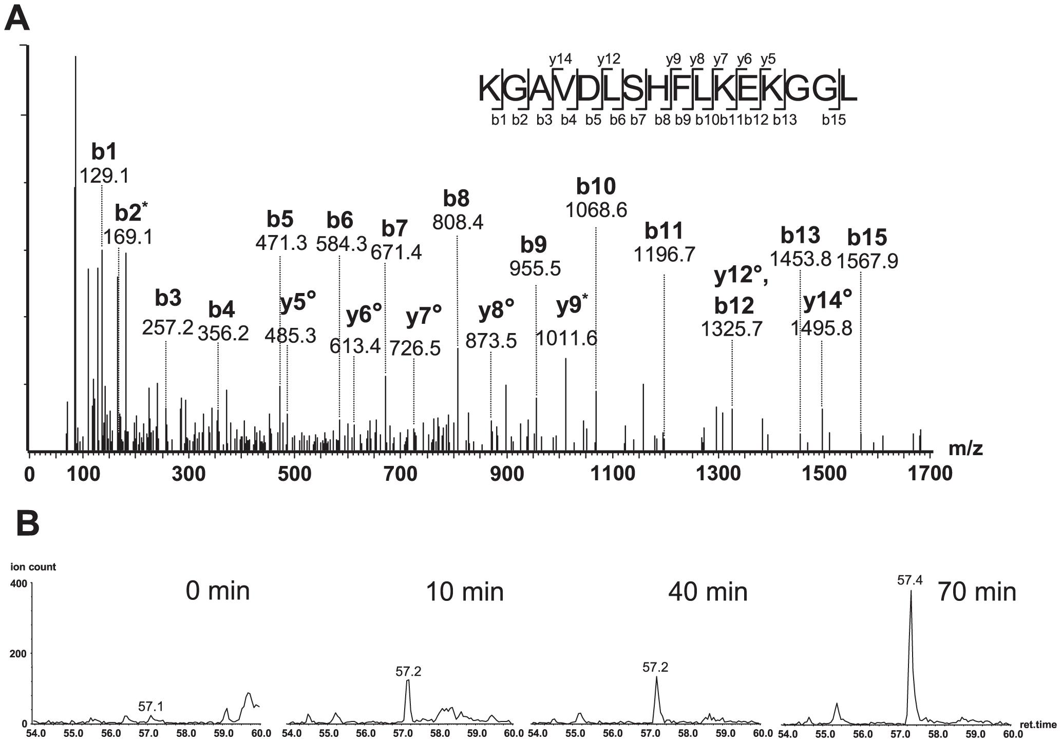 Oligopeptide HIV-1<sub>92UG029</sub> produced a correct C-terminally cleaved peptide (KGAVDLSHFLKEKGGL).