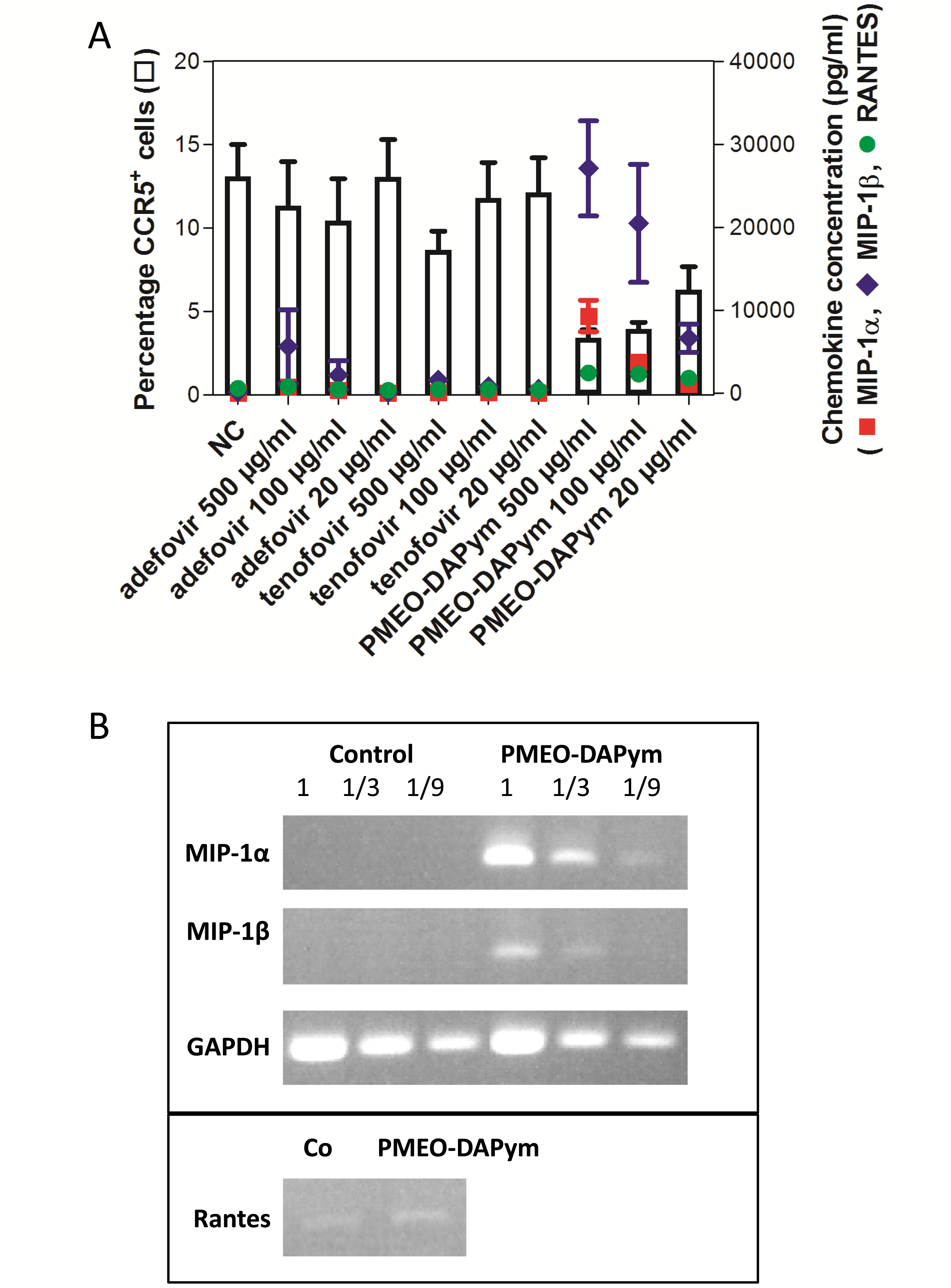 Expression of CC-chemokines, CCR5 and chemokine mRNA expression in PBMC cultures after drug treatment.
