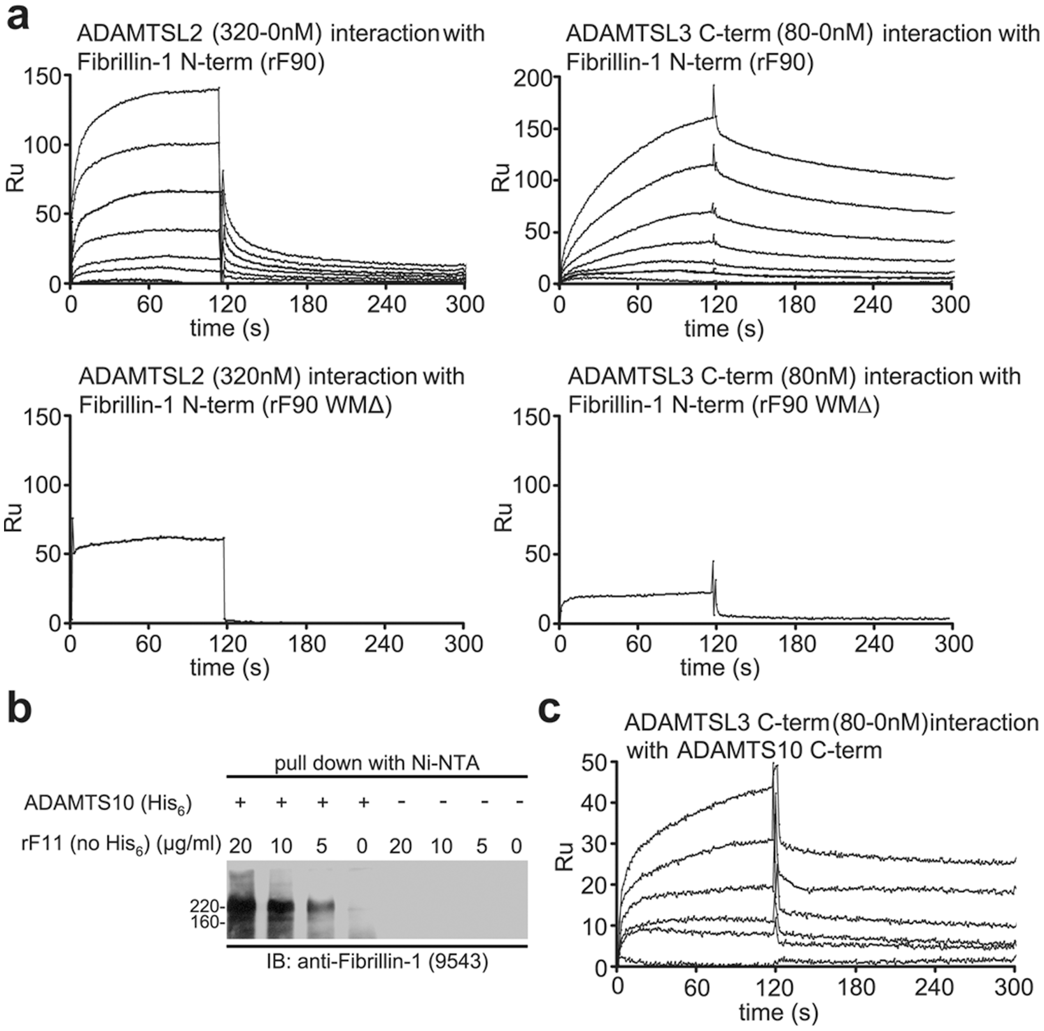 Biochemical analyses of interactions among ADAMTSL proteins, fibrillin-1, and ADAMTS-10.