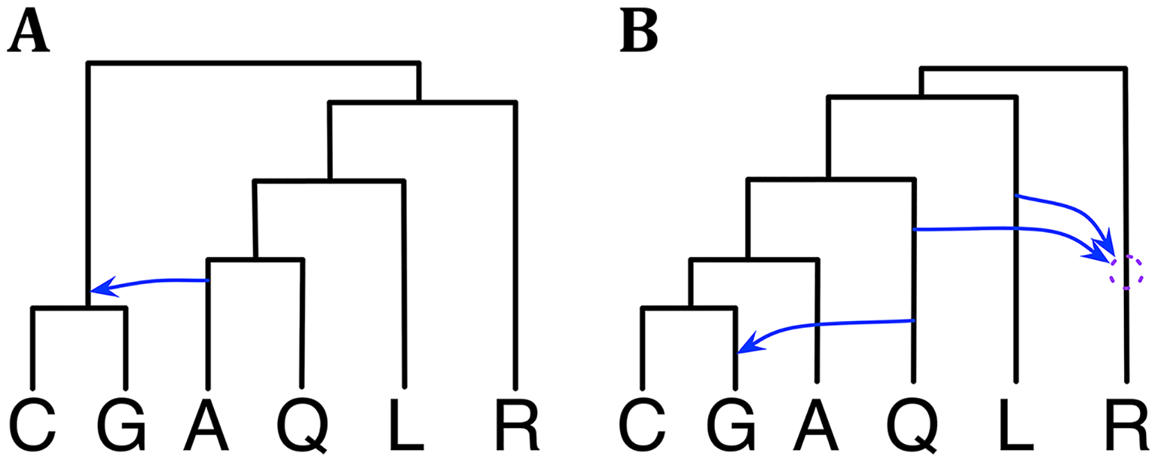 Phylogenetic history of the six mosquito genomes.