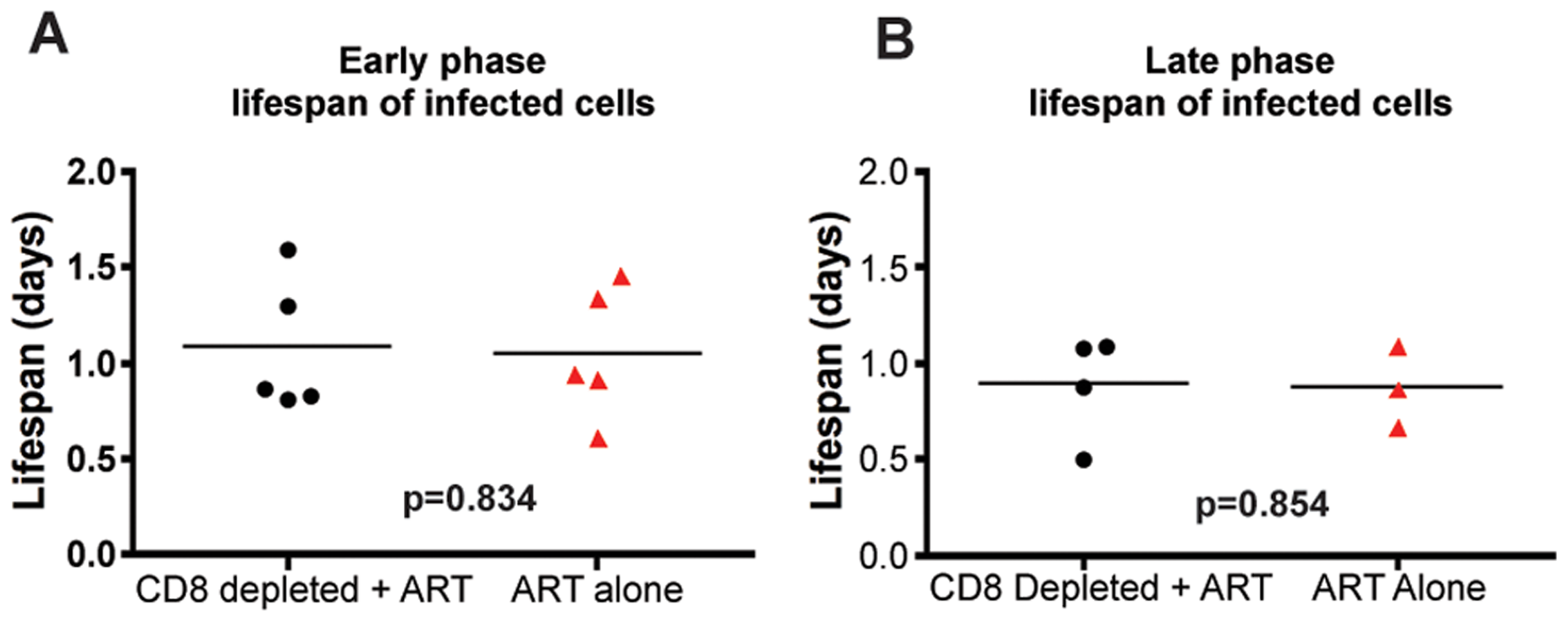 CD8+ lymphocyte depletion does not affect the lifespan of infected cells during SIV infection.