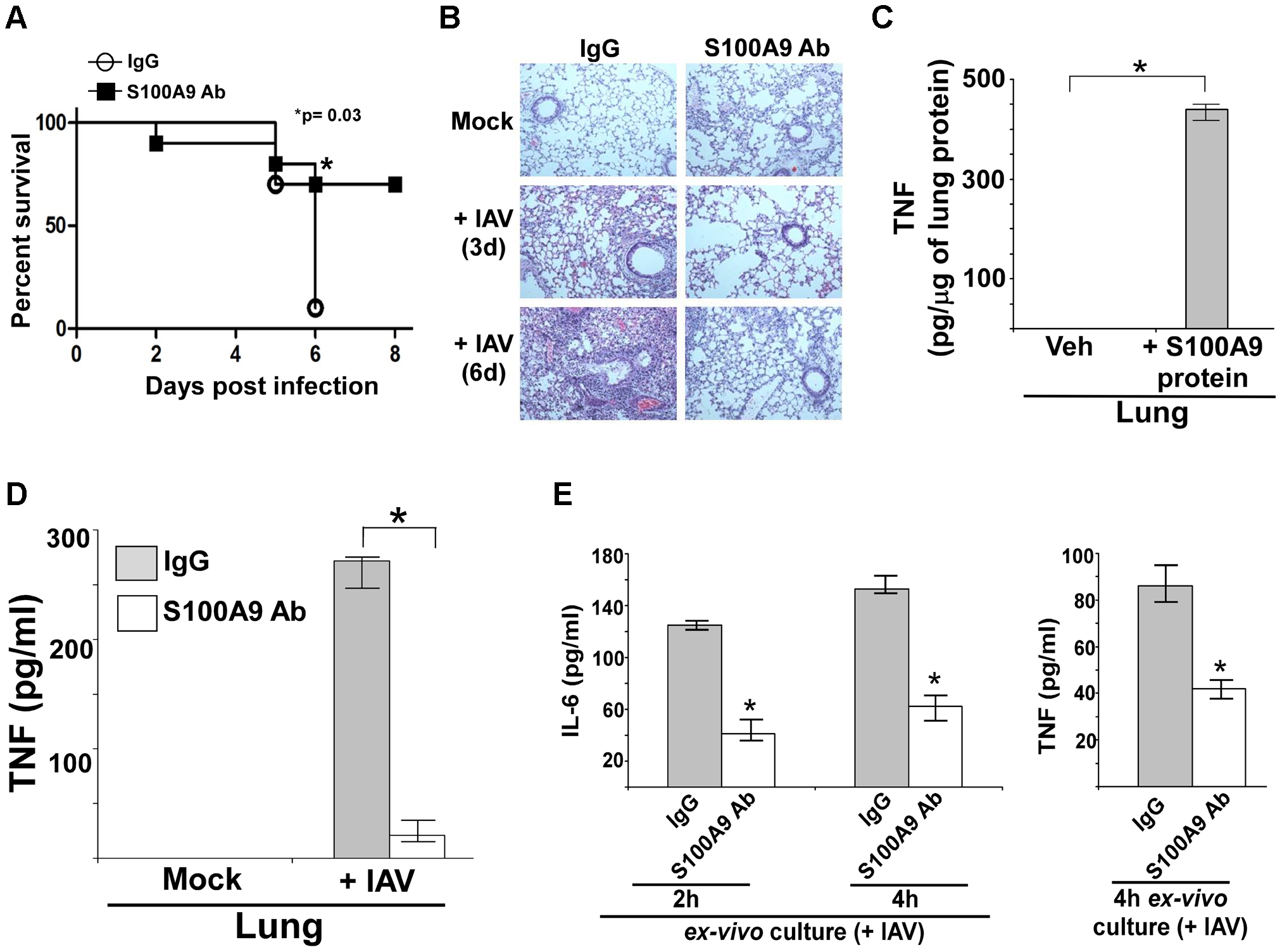 S100A9 contributes to enhanced susceptibility and inflammation during IAV infection and S100A9 regulates pro-inflammatory response in the respiratory tract of IAV infected mice.