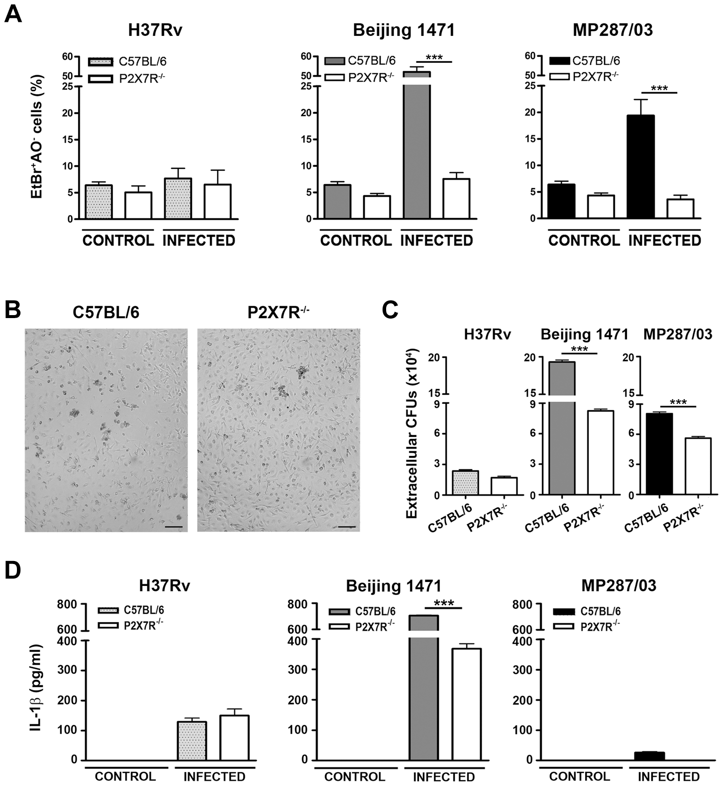 Induction of necrotic cell death and the release of bacteria and IL-1β in P2X7R<sup>−/−</sup> and C57BL/6 BMDMs infected with hypervirulent mycobacteria.