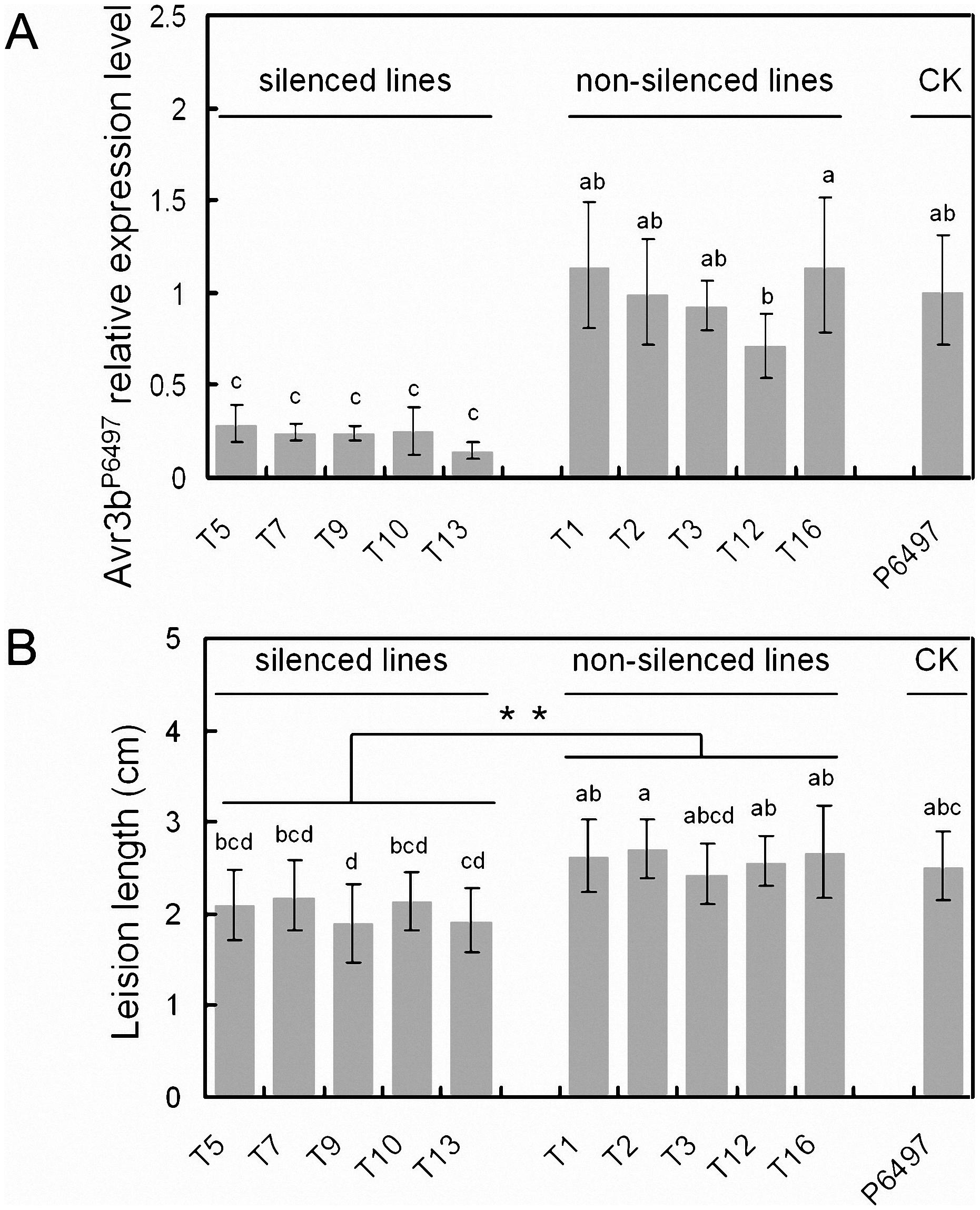 Transient silencing of Avr3b impaired <i>P. sojae</i> virulence on soybean.