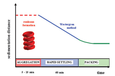Fig. 1: Three phases of the standard red blood cell sedimentation.