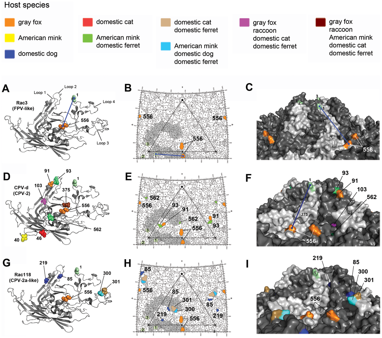 Structural location of the VP2 capsid mutations arising during experimental evolution studies in the six different hosts.
