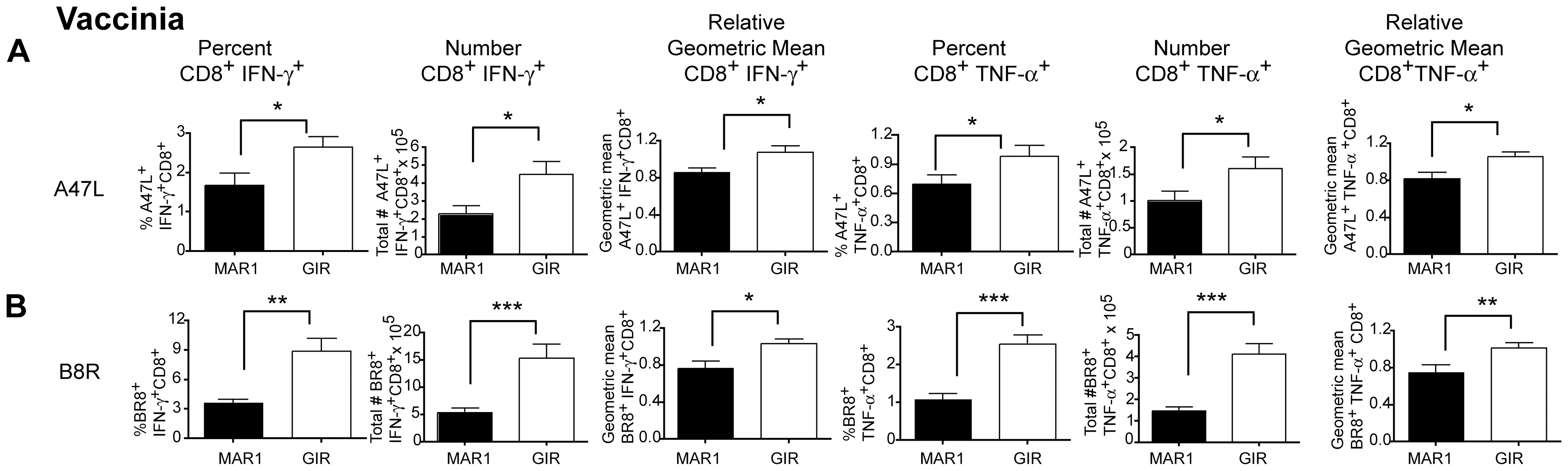 Effect of MAR1-5A3 on VV-specific CD8<sup>+</sup> T cell responses in the spleen.