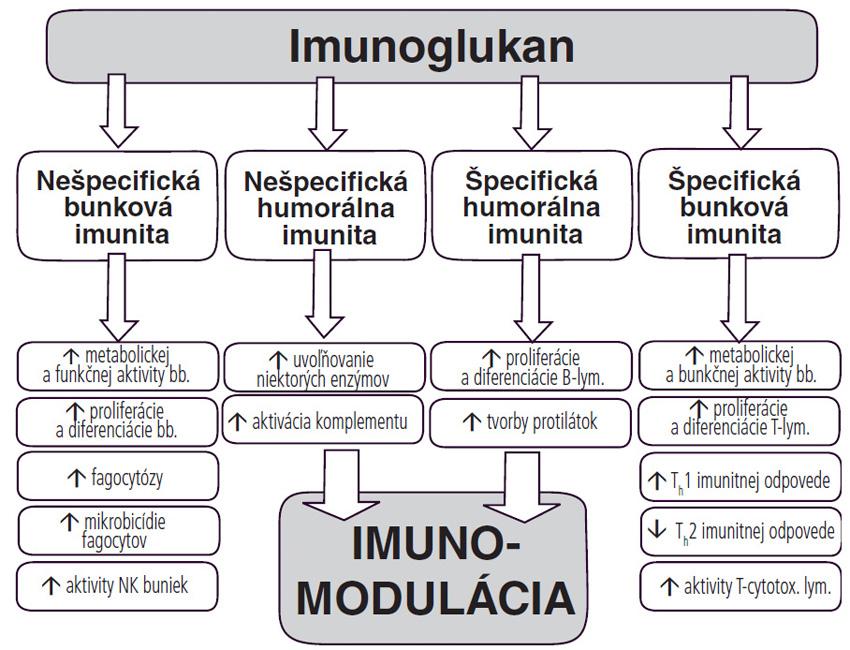 Schéma 2. Mechanizmy pôsobenia imunoglukanu na imunitný systém.